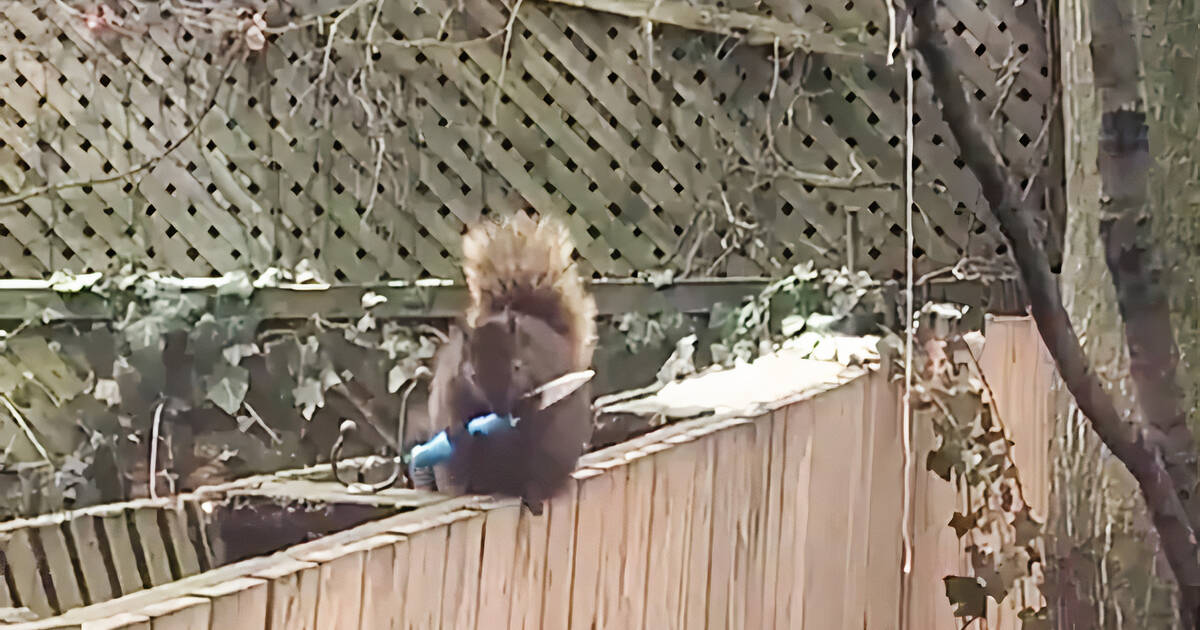 Knife-wielding squirrel captured on camera in Toronto