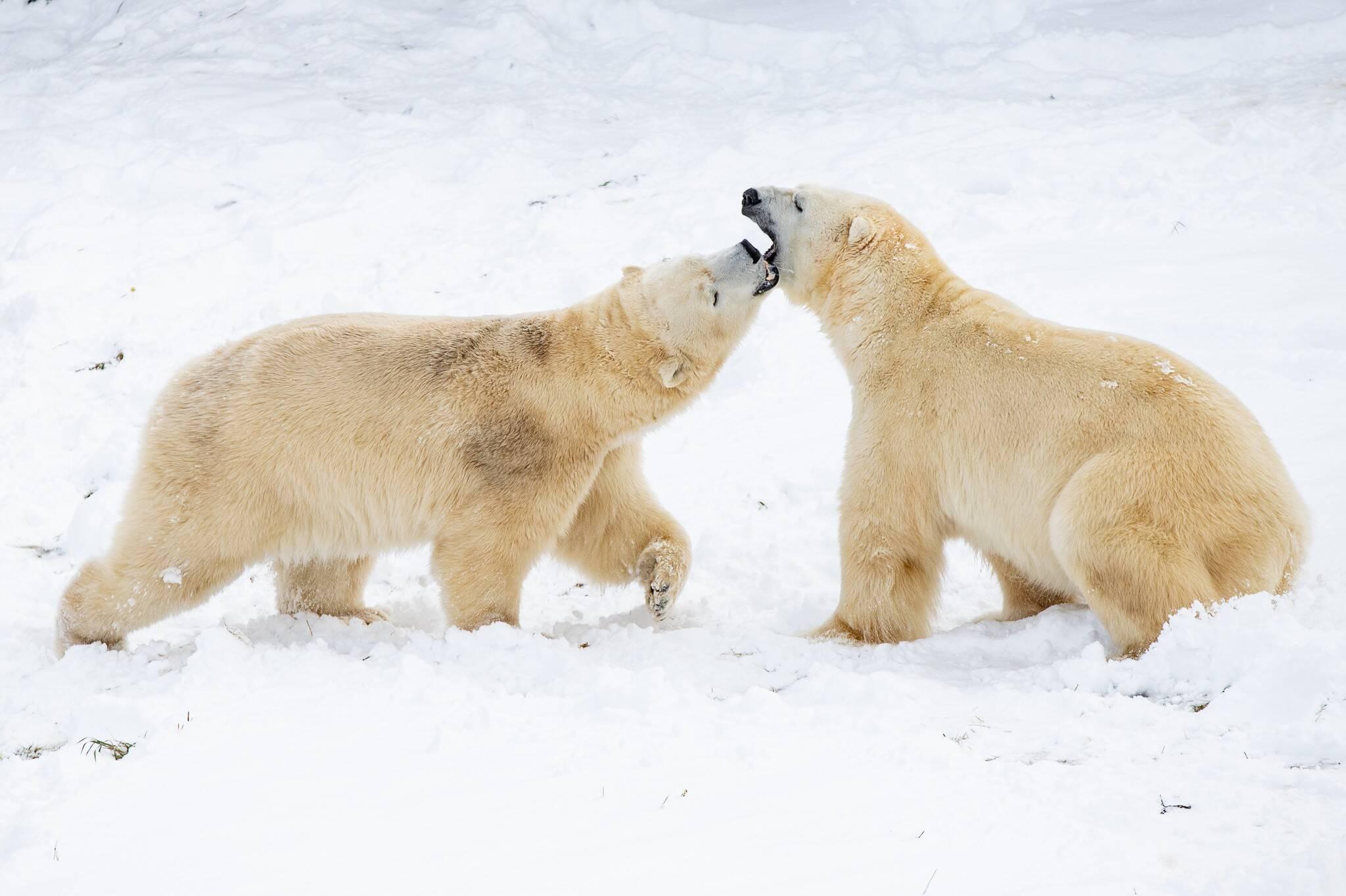 Polar Bear Habitat Ontario