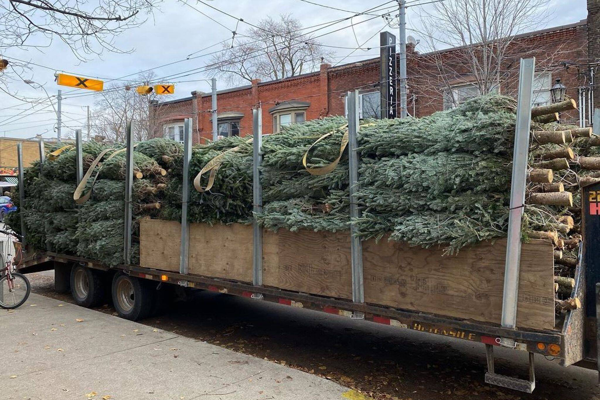 christmas tree delivery toronto