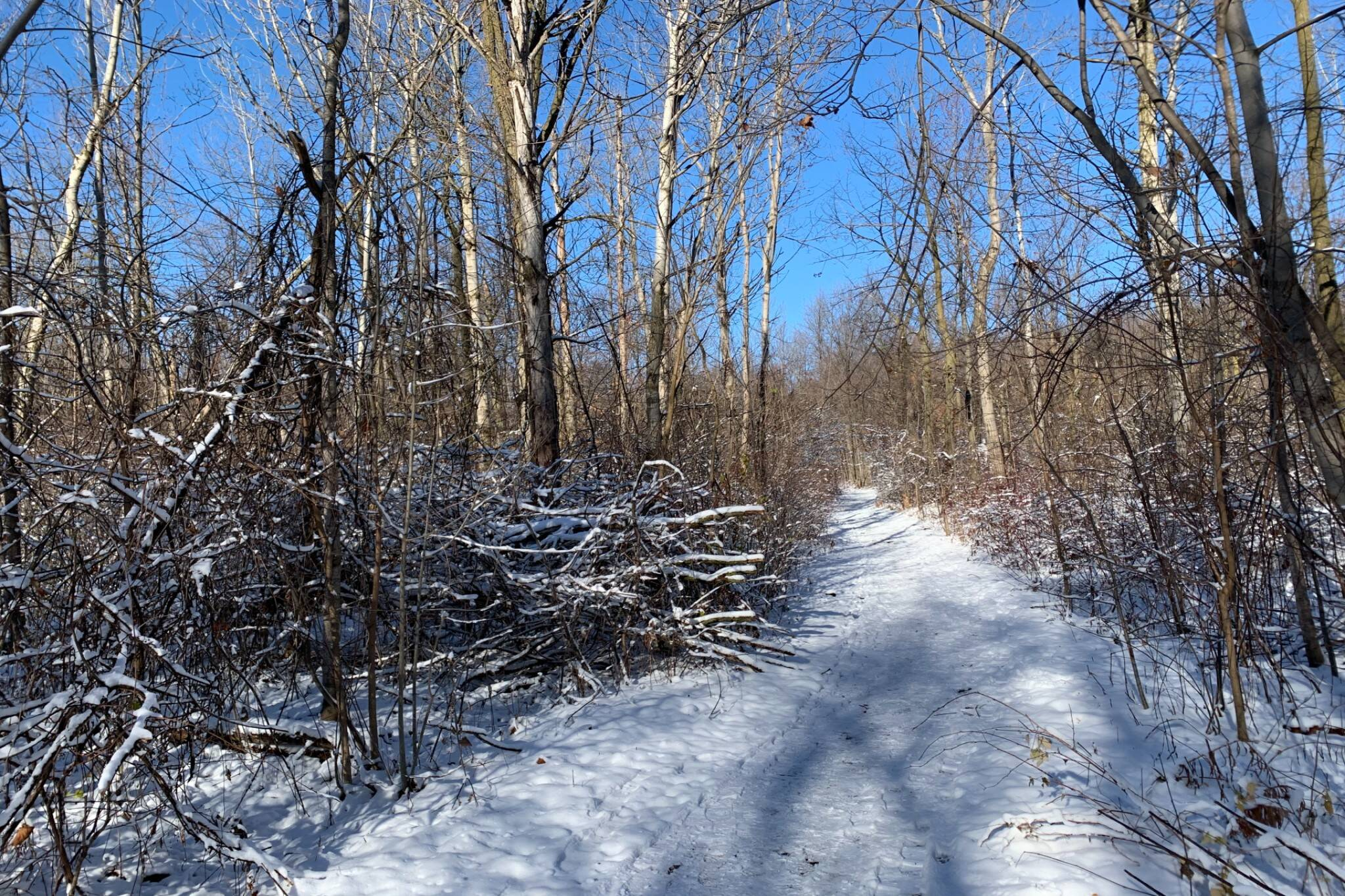 L'Amoreaux Park Toronto