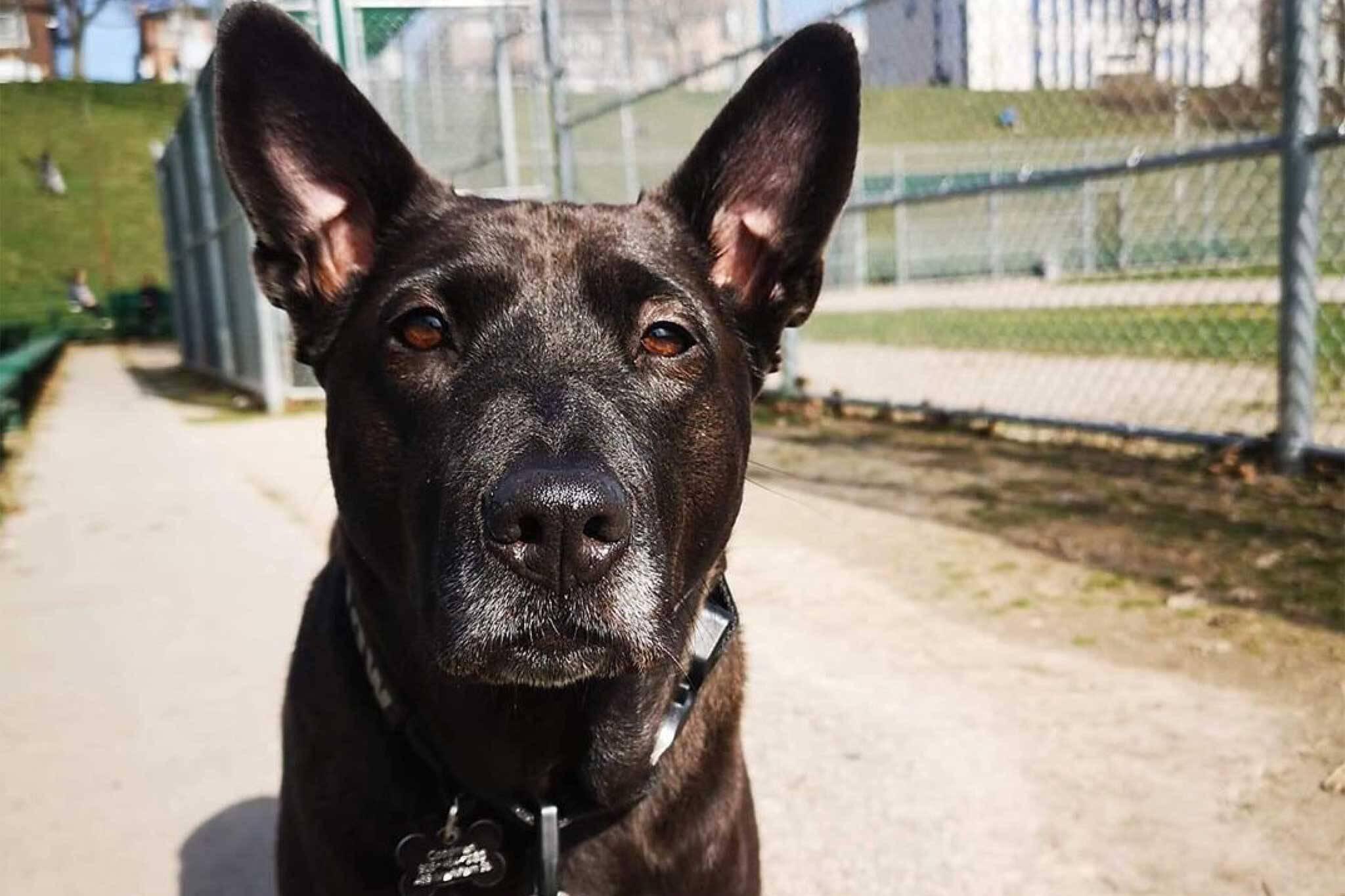 dog rescue toronto