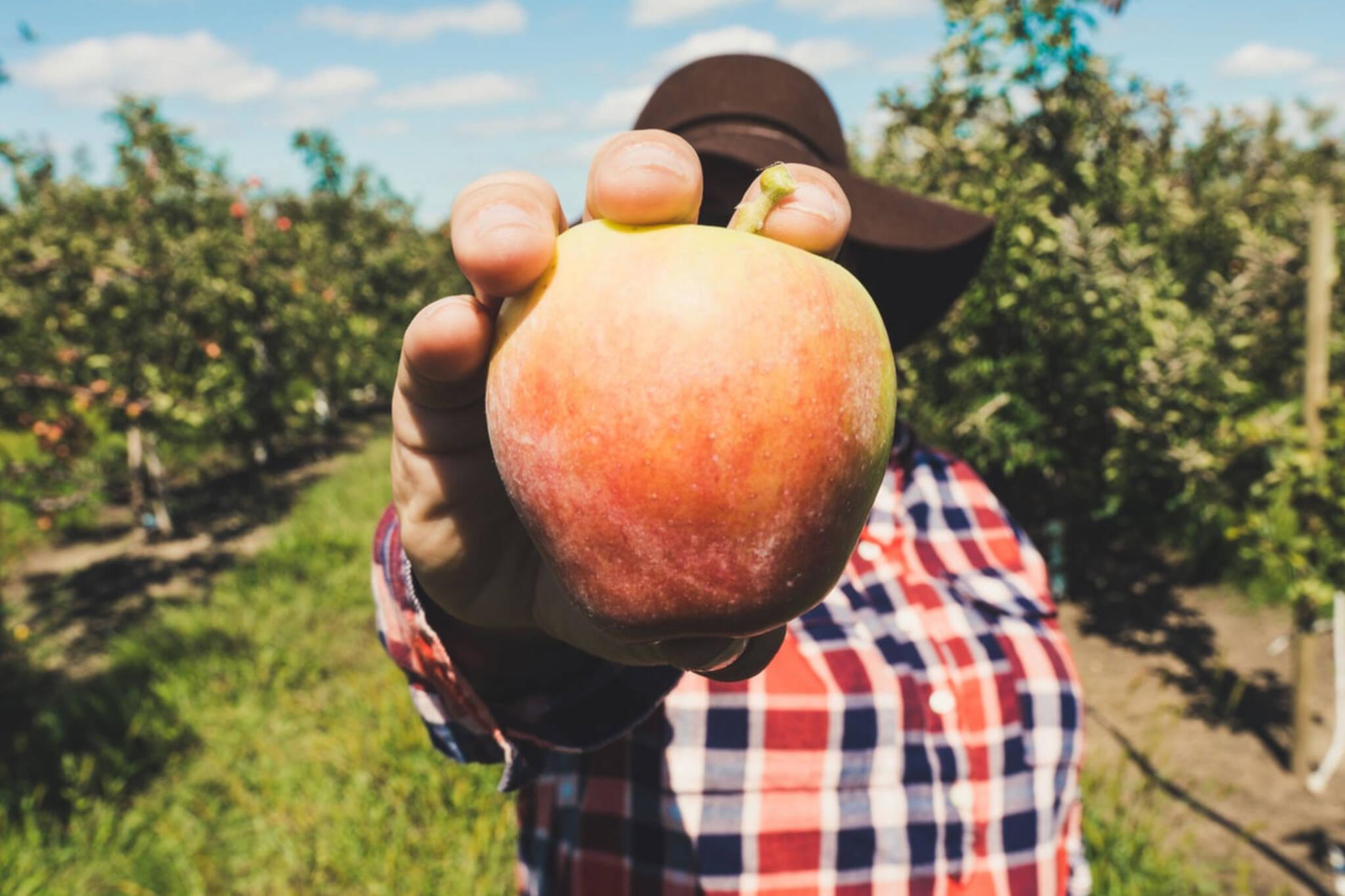 toronto fruit orchard