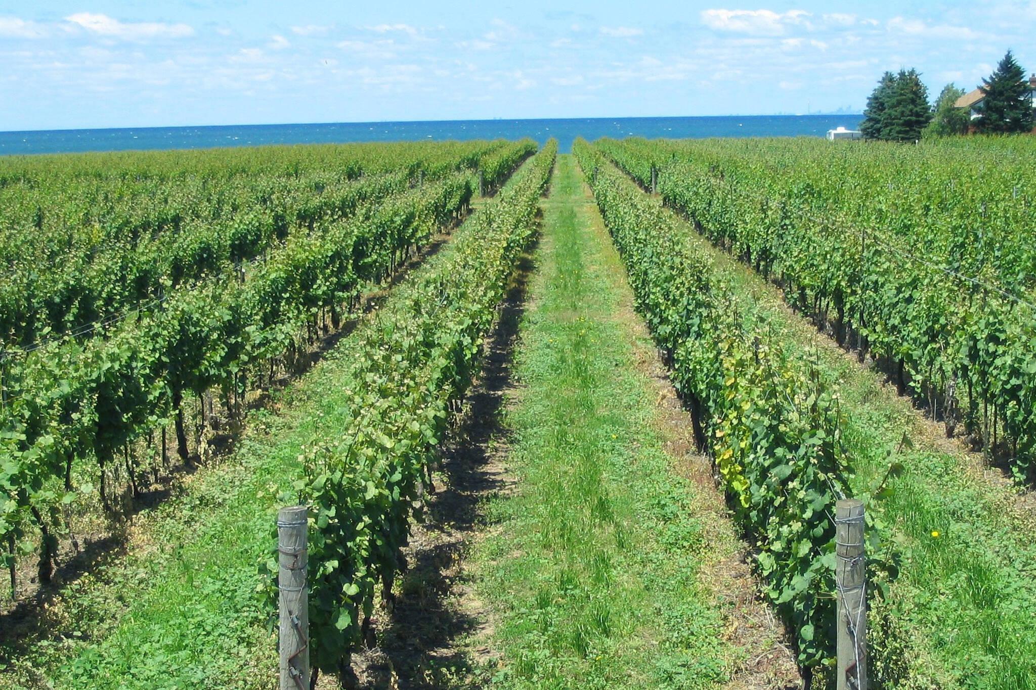 niagara on the lake wineries