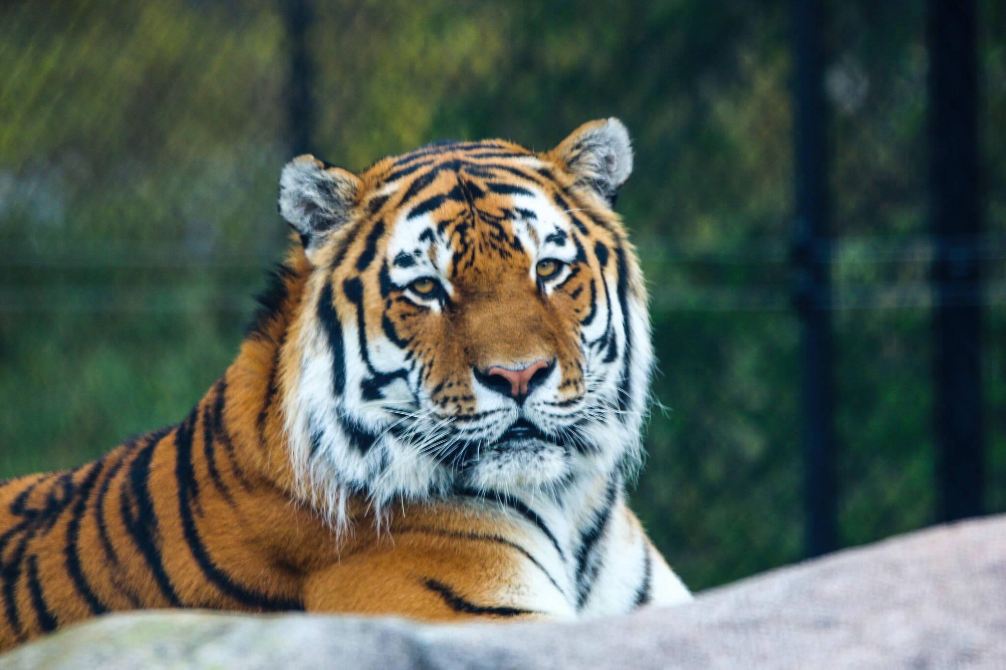 toronto zoo reopening