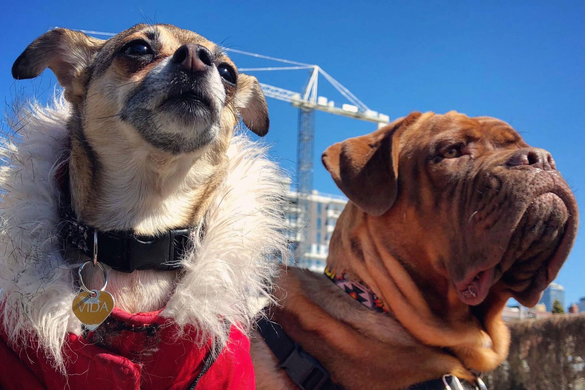 dogs condo toronto