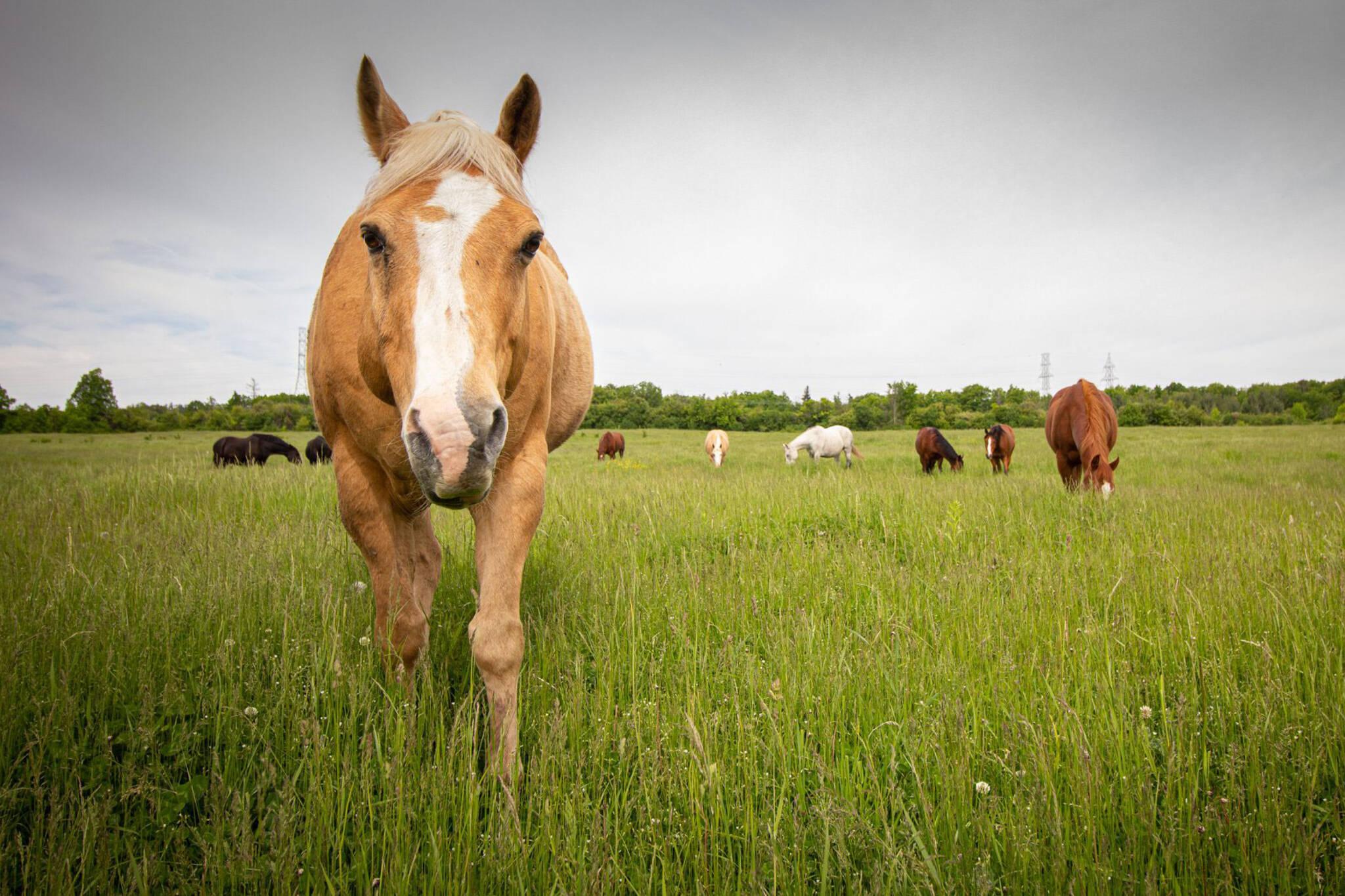 ranch oakville