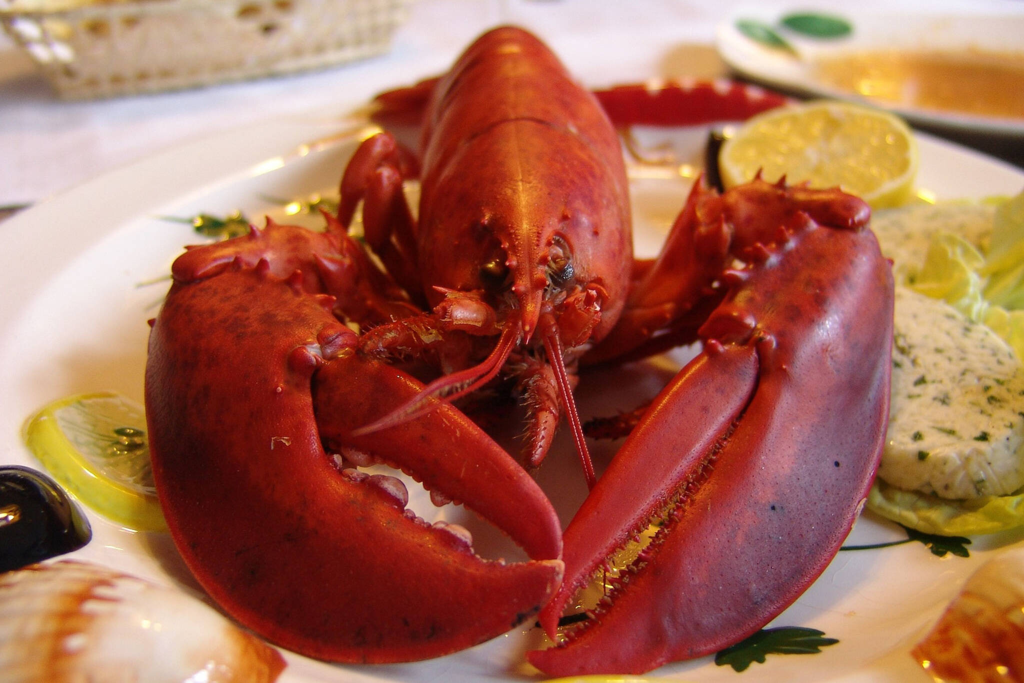 lobster boil toronto