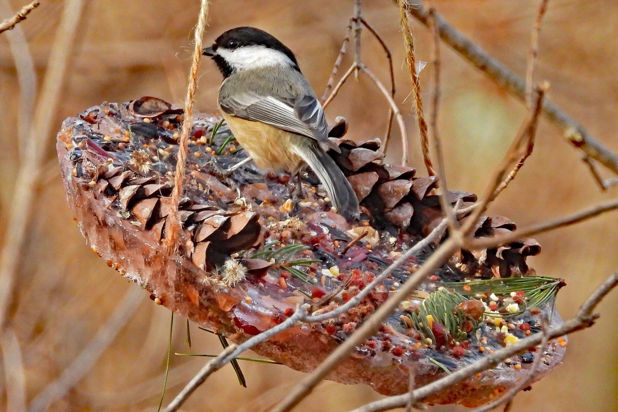 bird feeders toronto