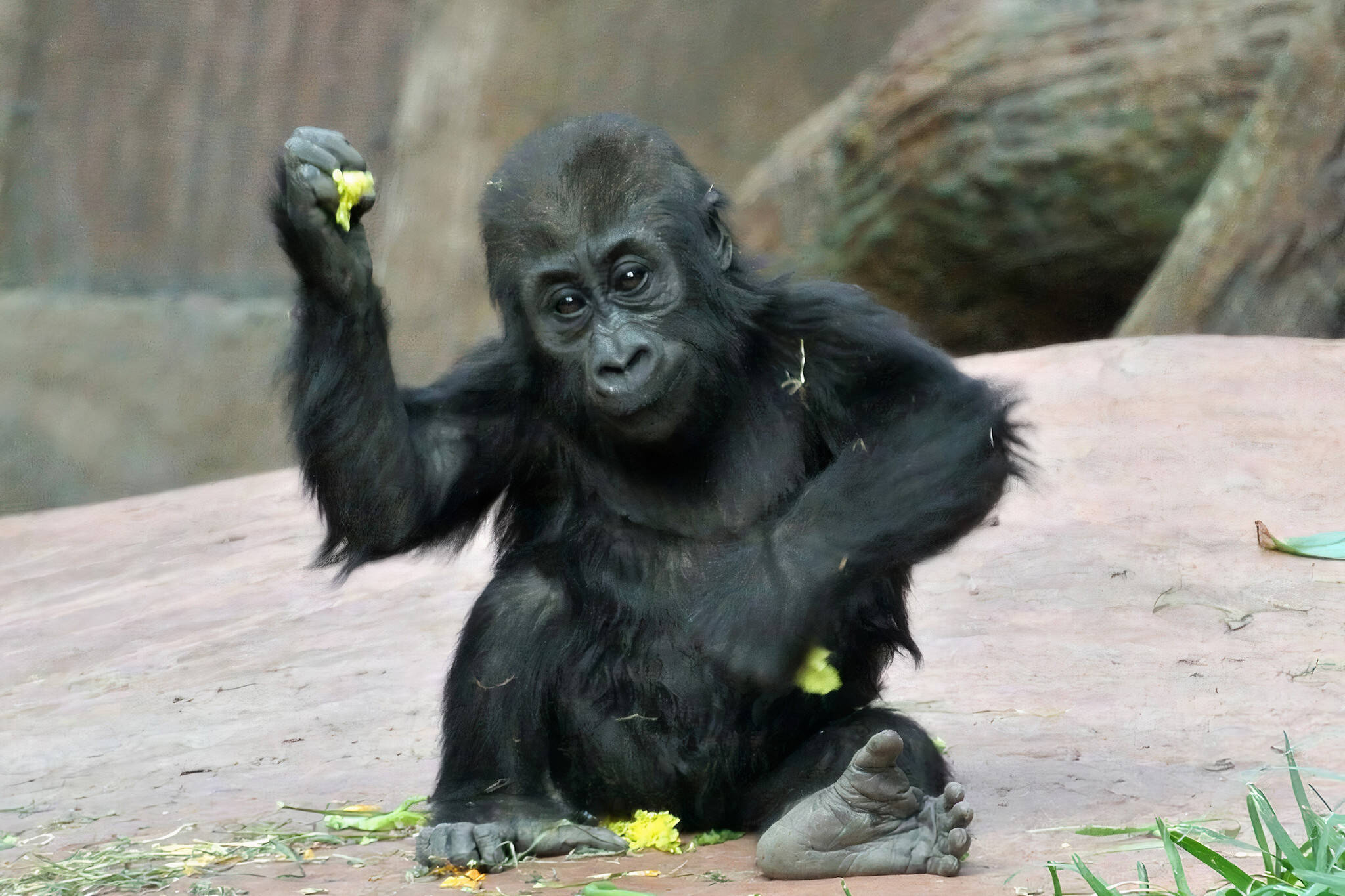 toronto zoo phone apes
