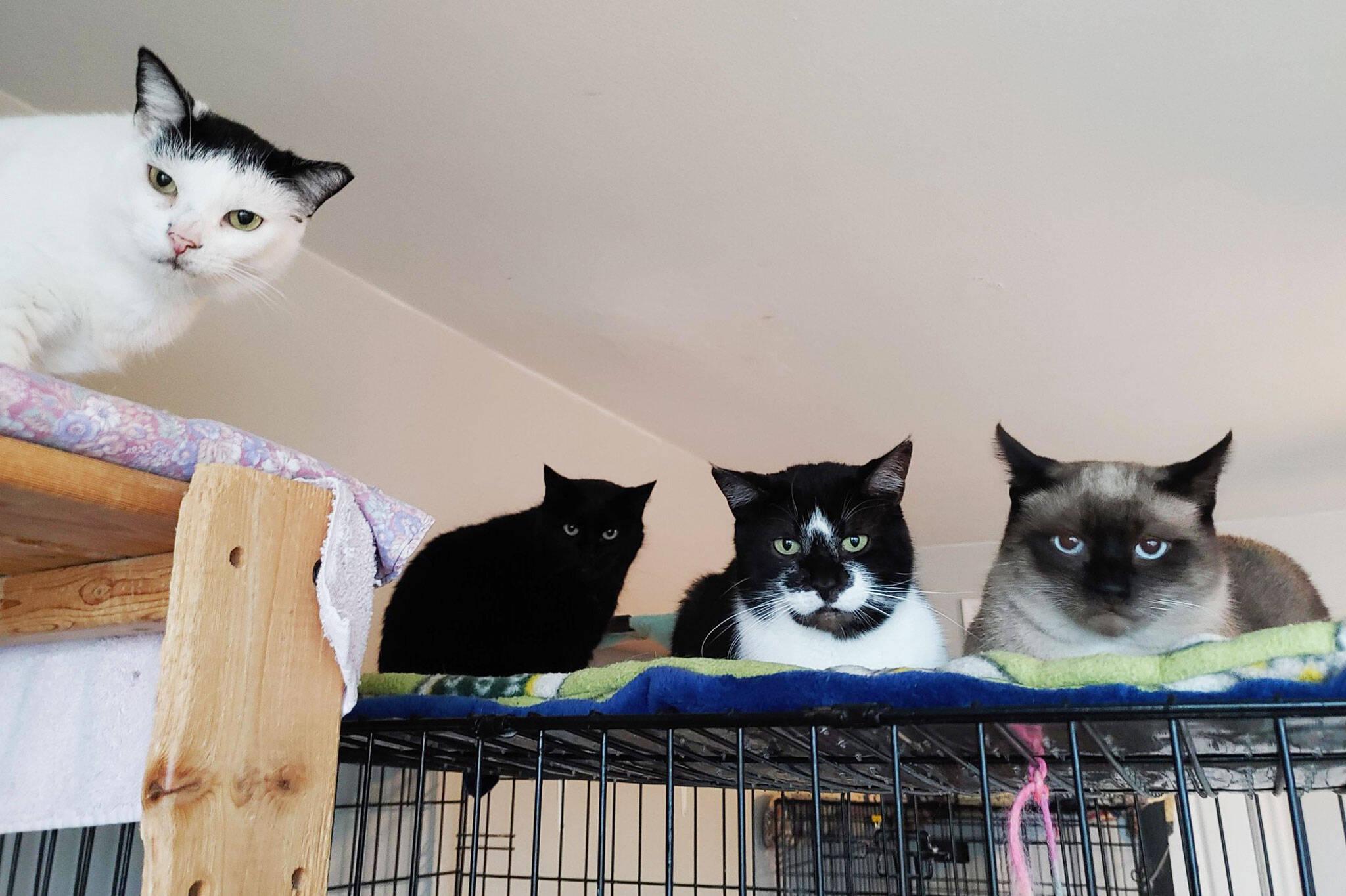 cat rescue toronto