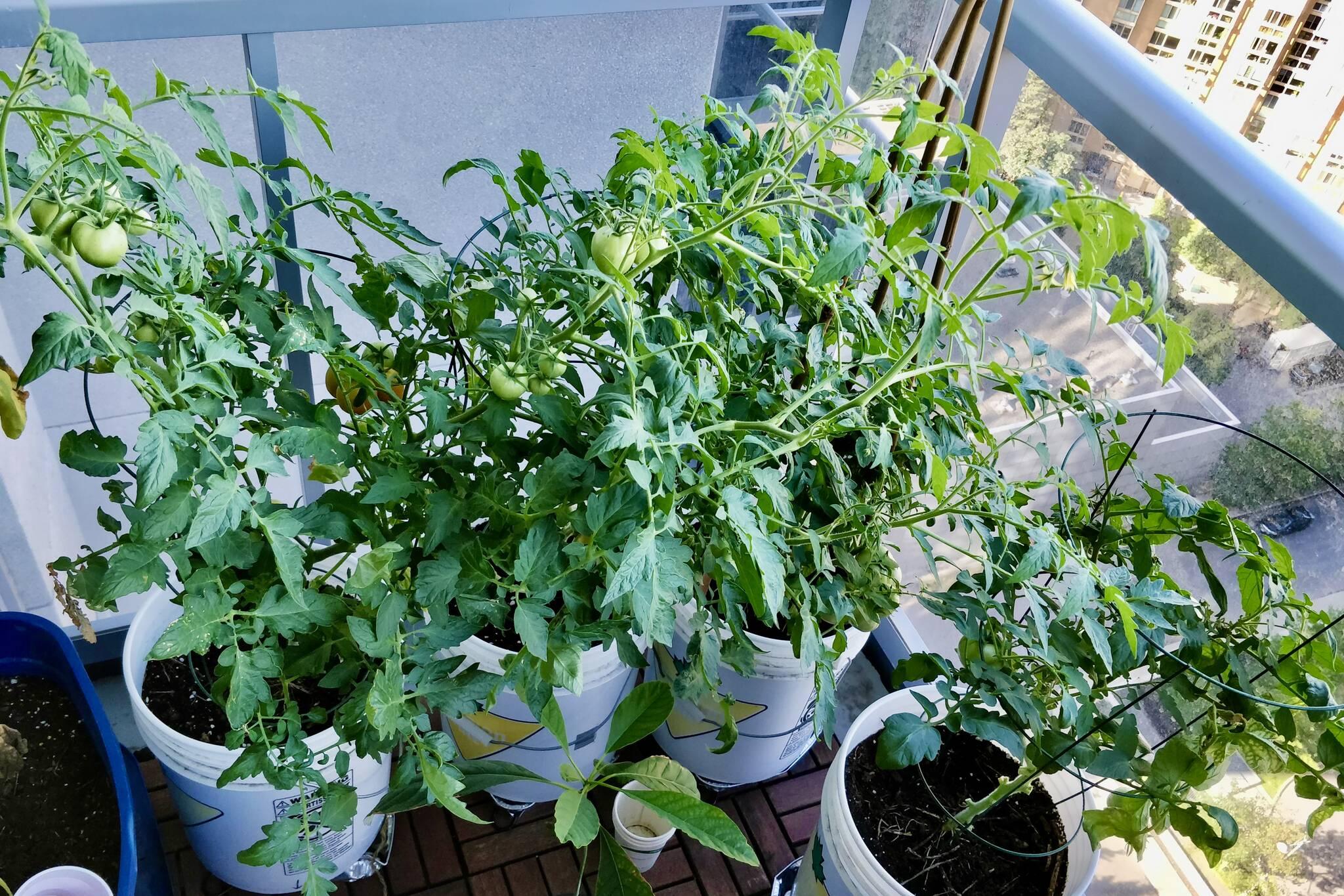 balcony garden toronto
