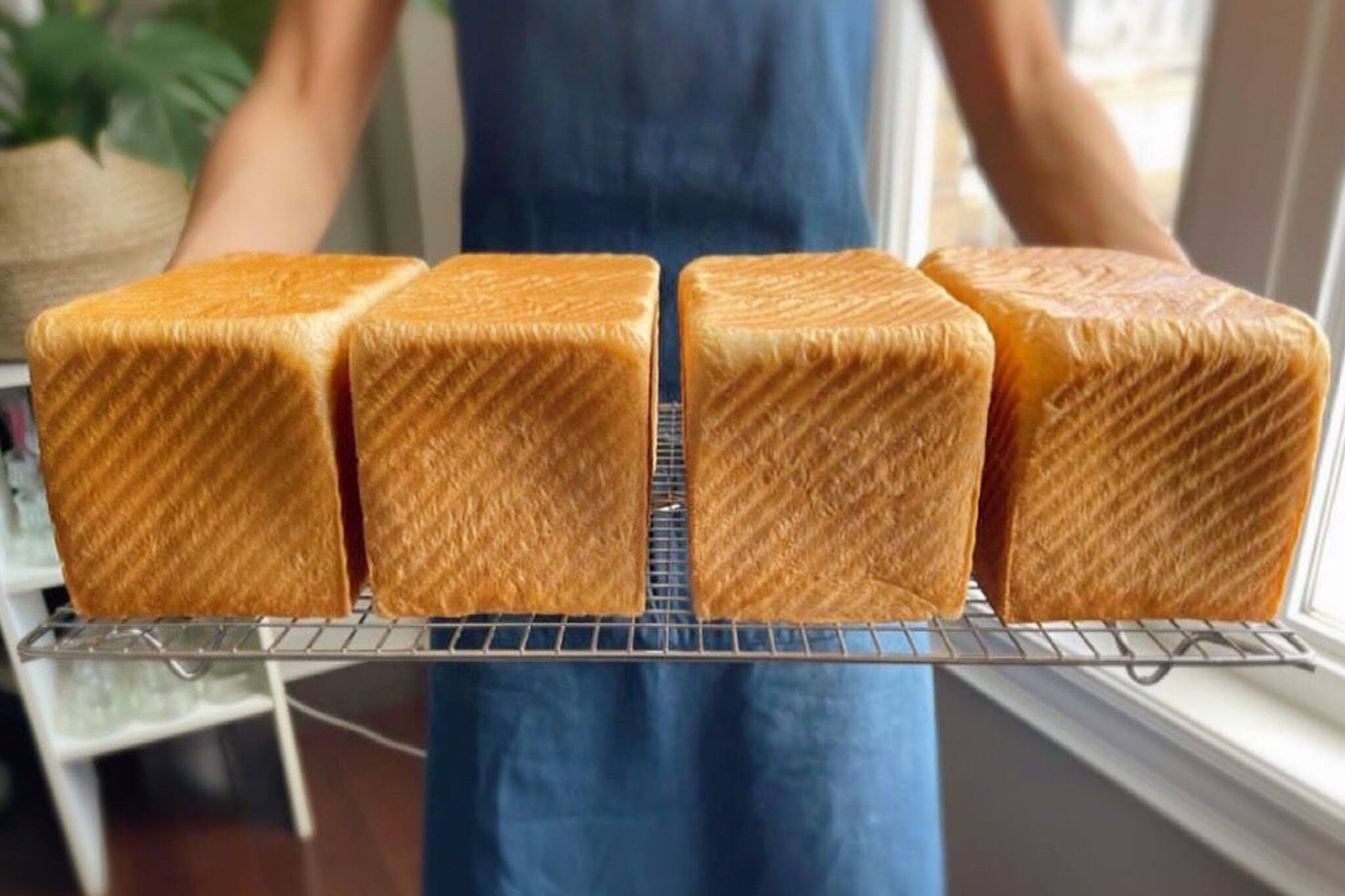 japanese milk bread toronto