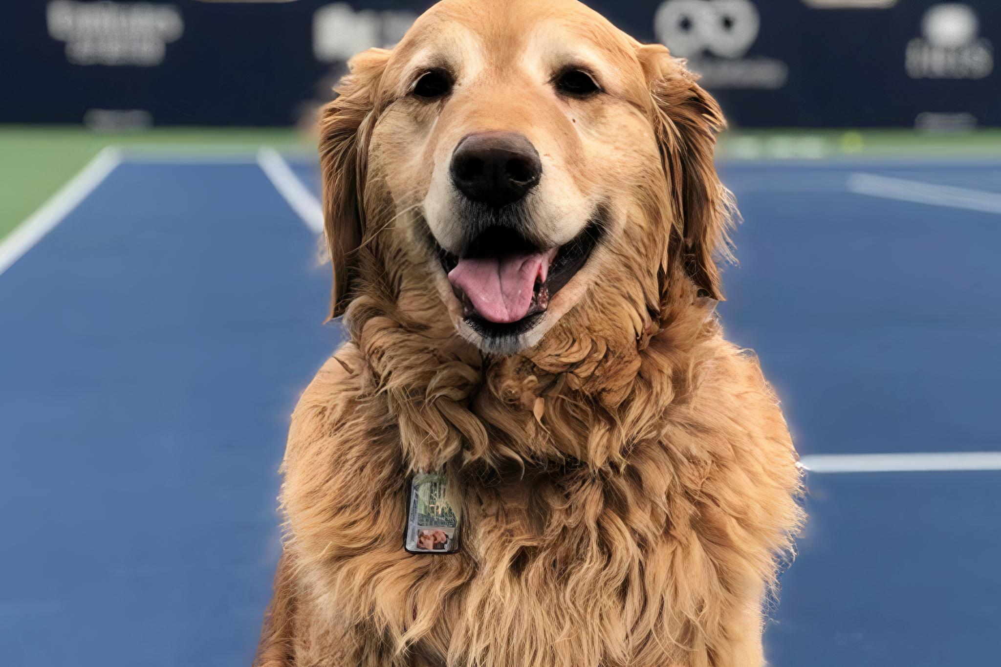 tennis canada fundraiser