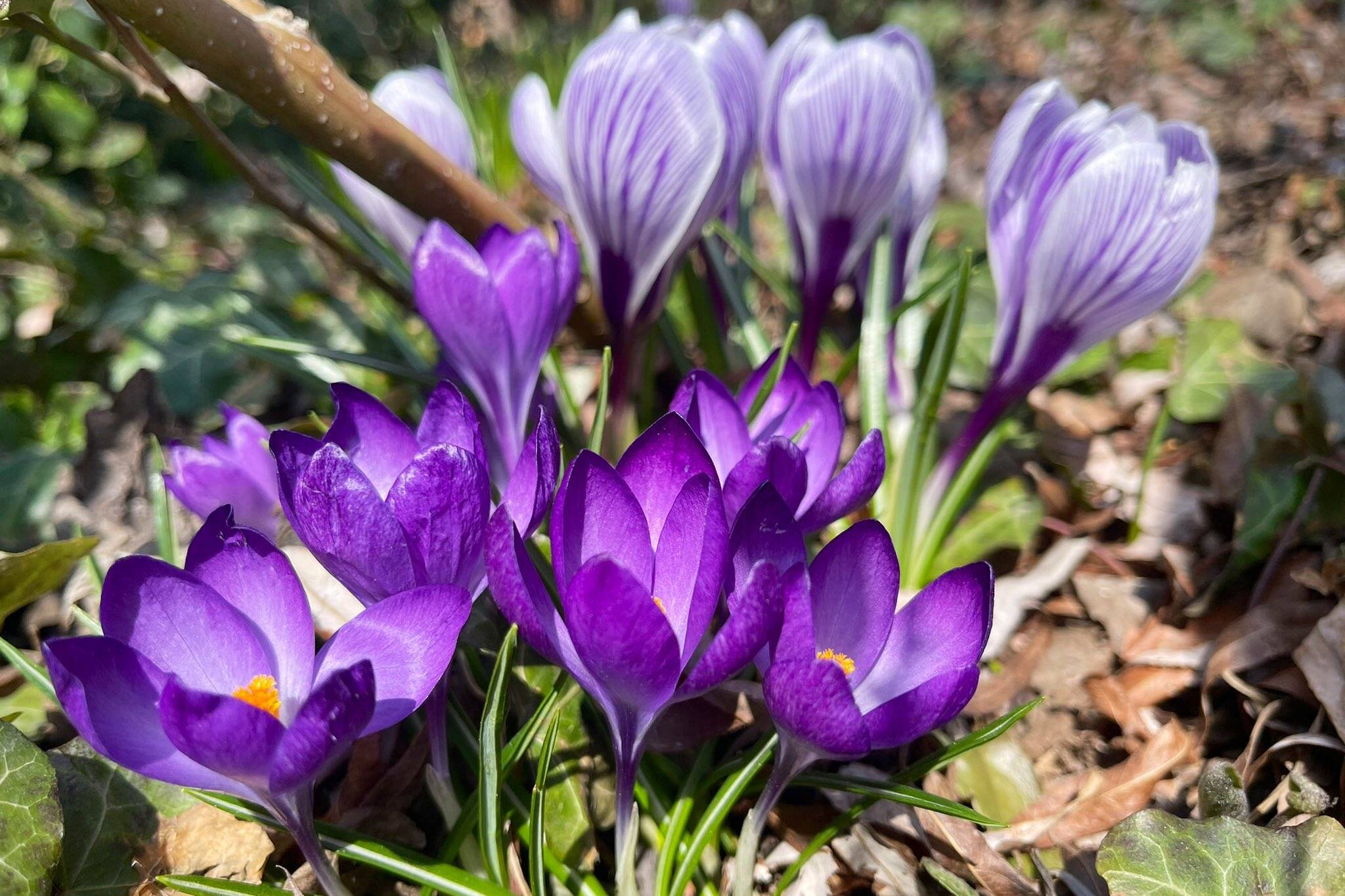 flower report toronto