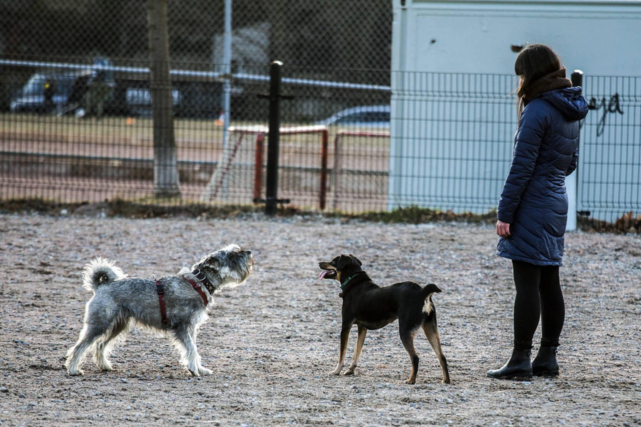 off leash dog park toronto