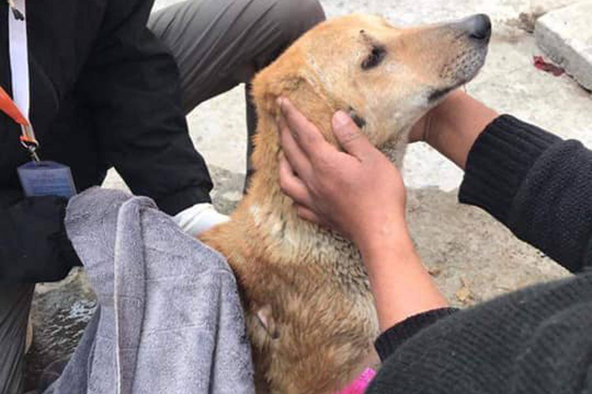 dog adoption toronto