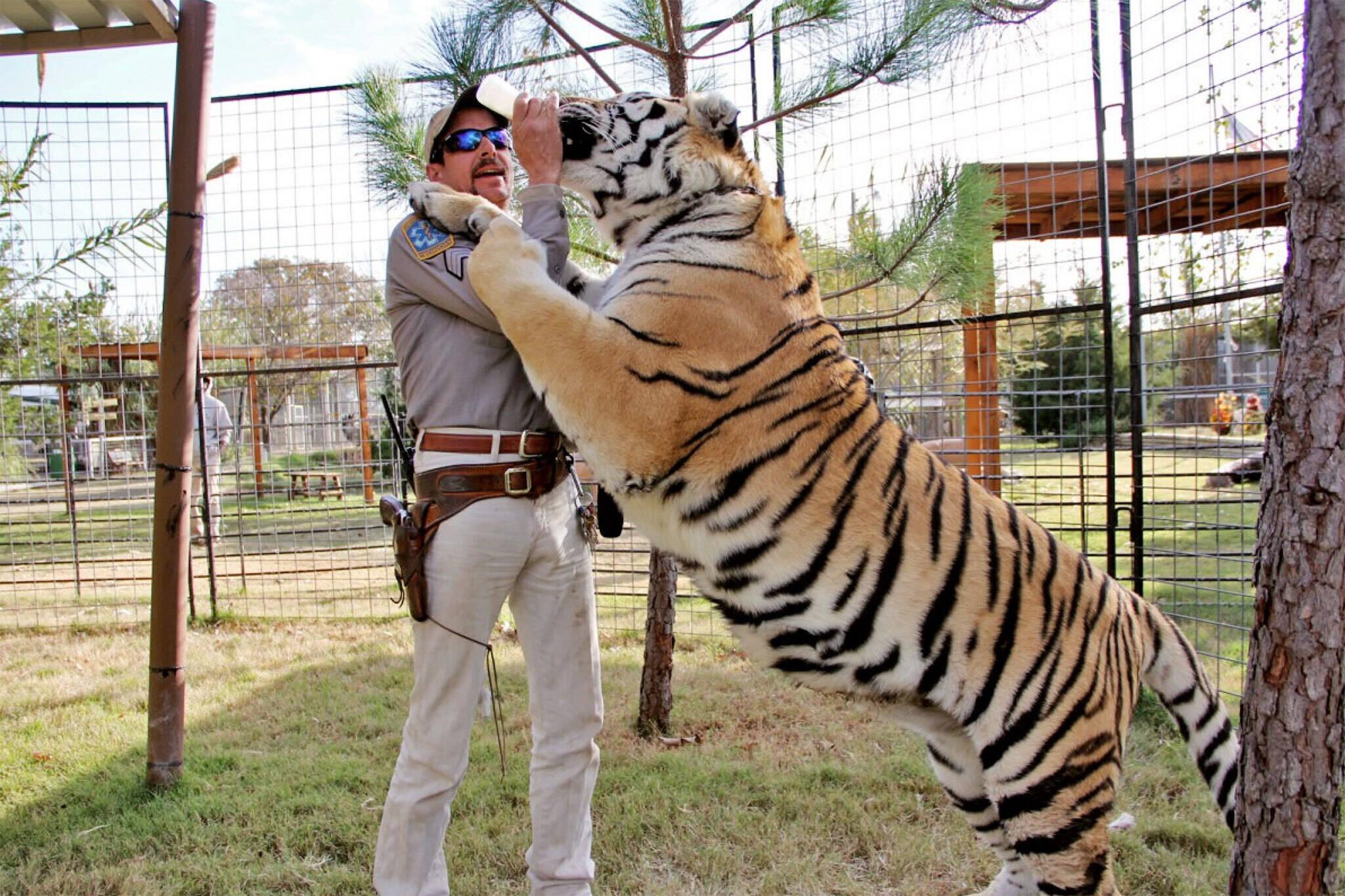 Tiger King toronto