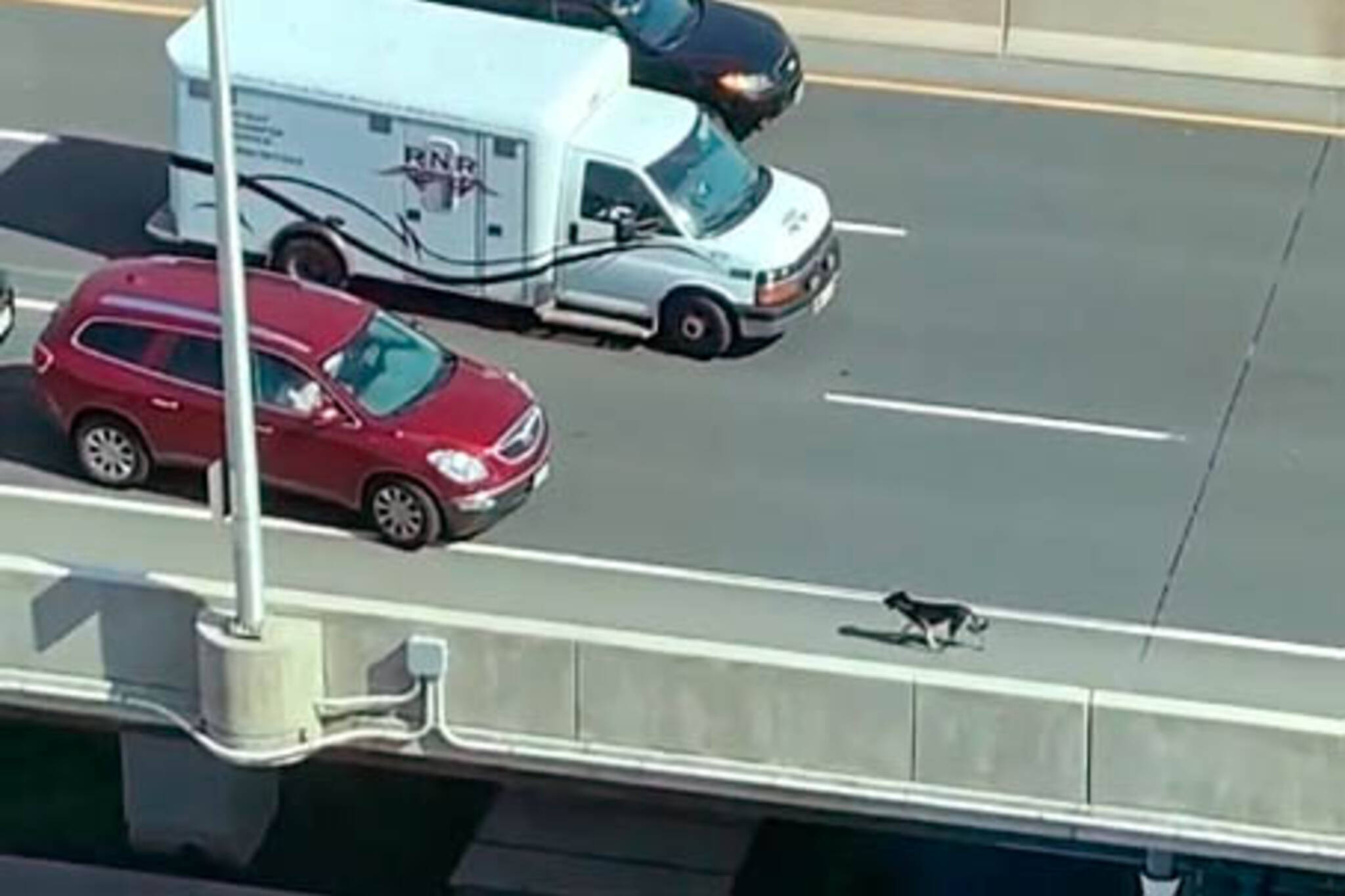 gardiner expressway dog