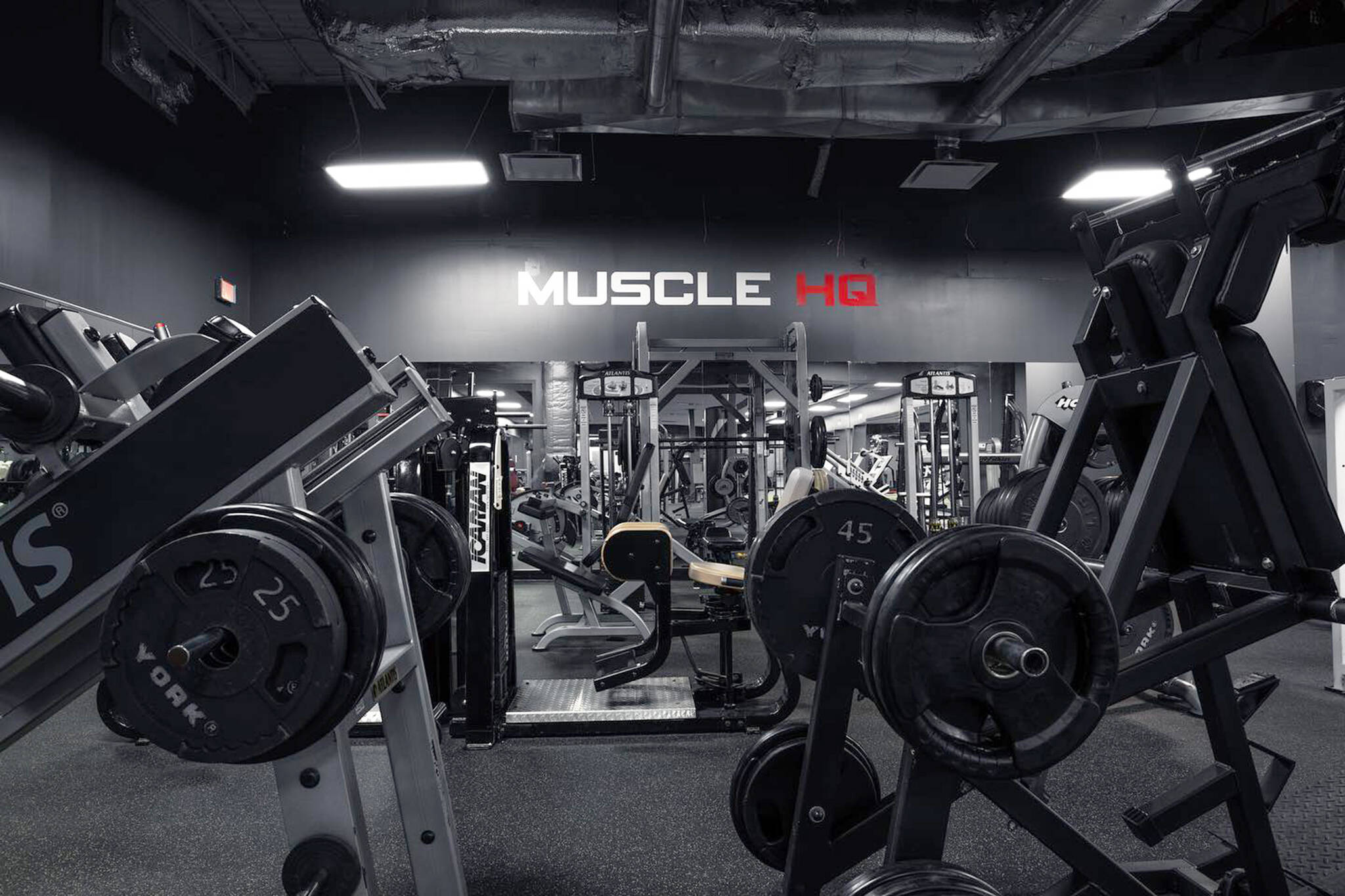muscle hq