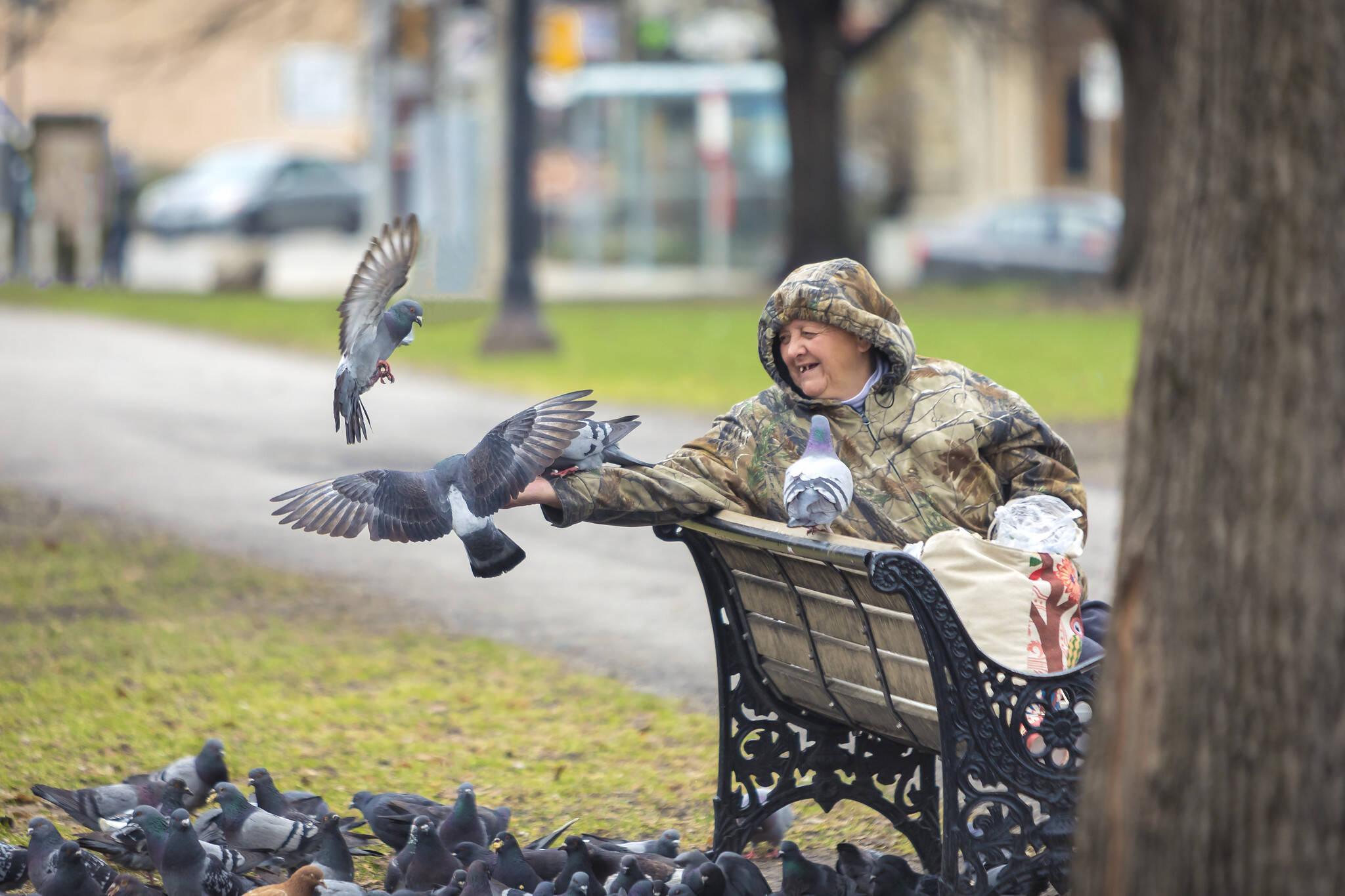 toronto pigeons