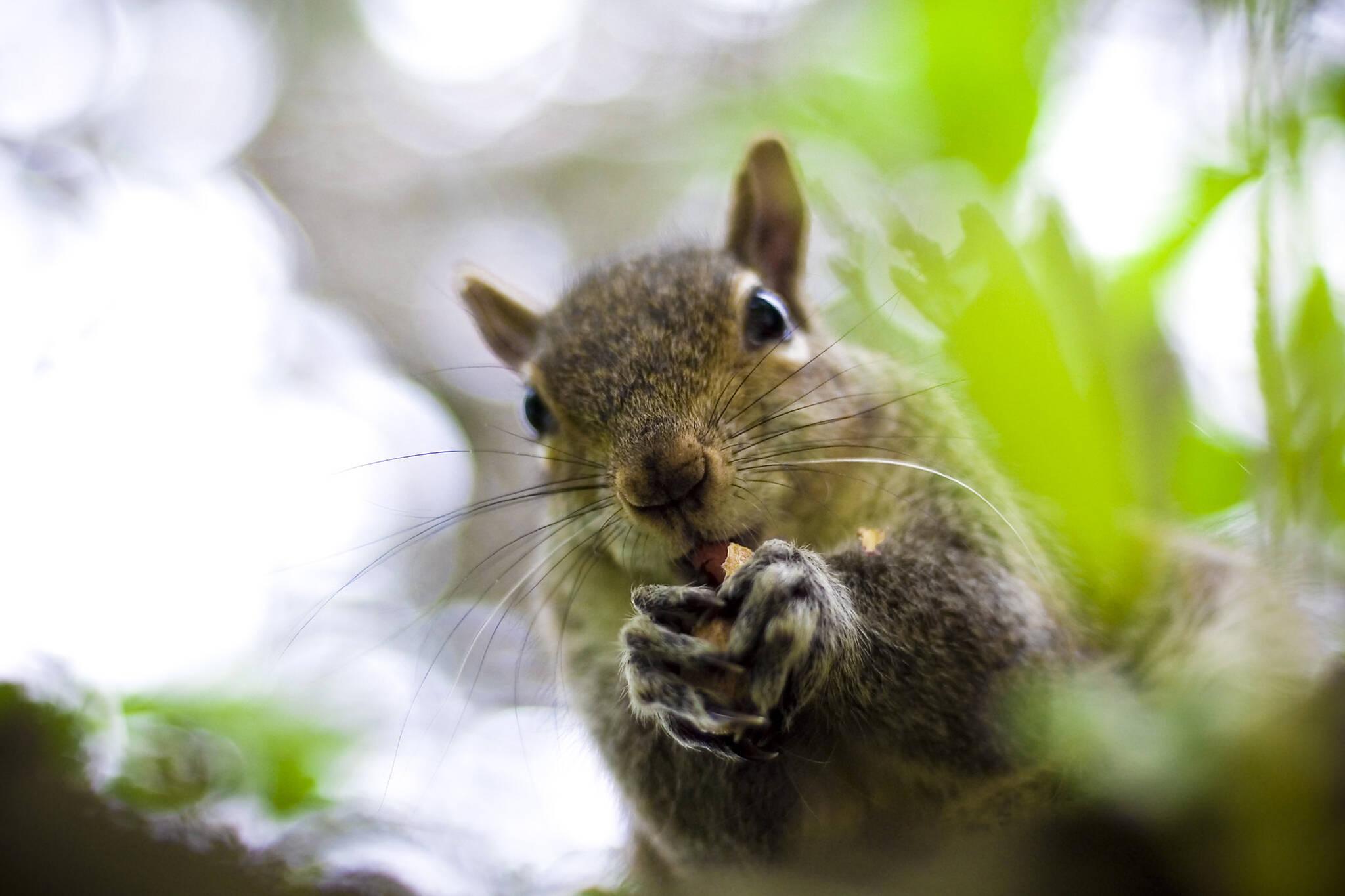 squirrel feeding toronto