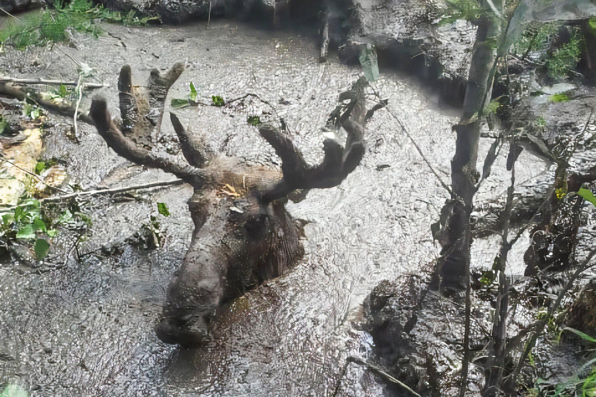 moose rescue timmins