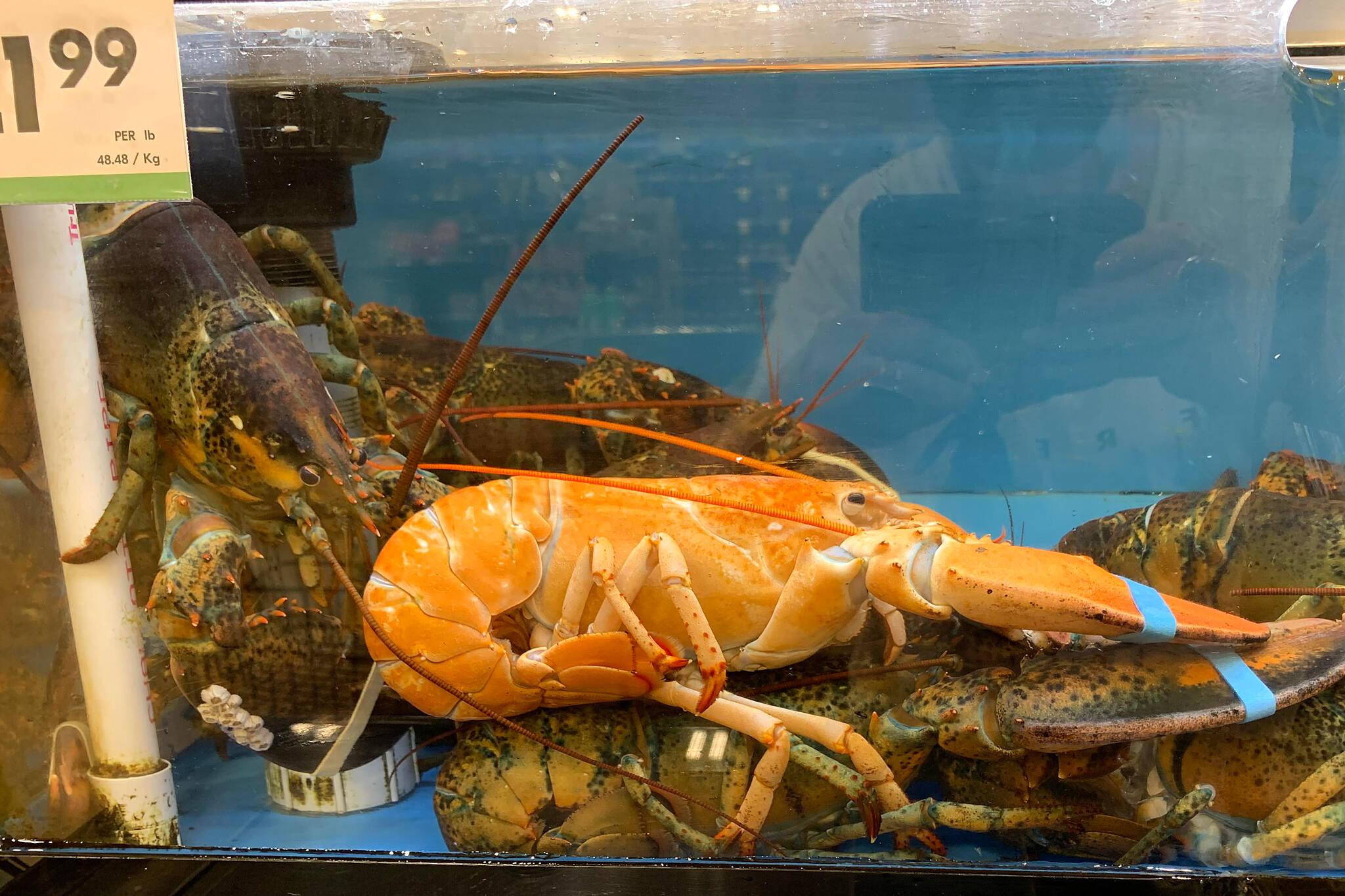 orange lobster toronto