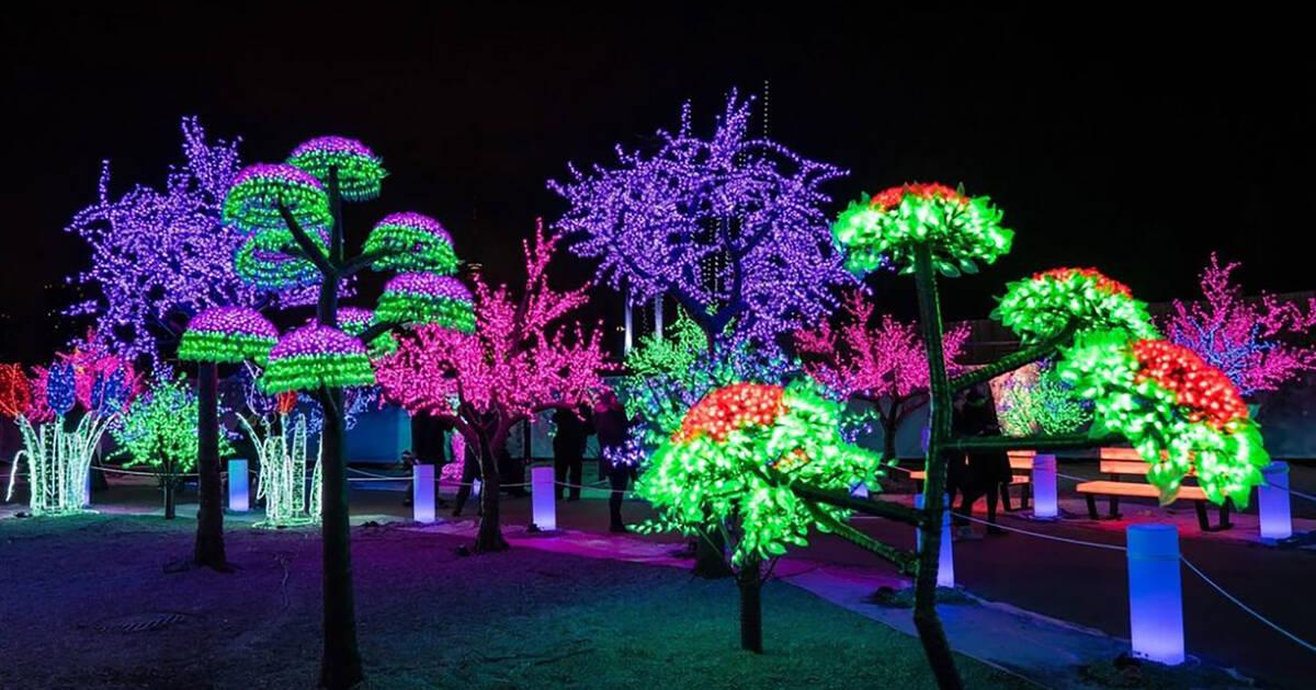 来月トロント近郊でクリスマスマーケットのあるライトフェスティバルが開催されます