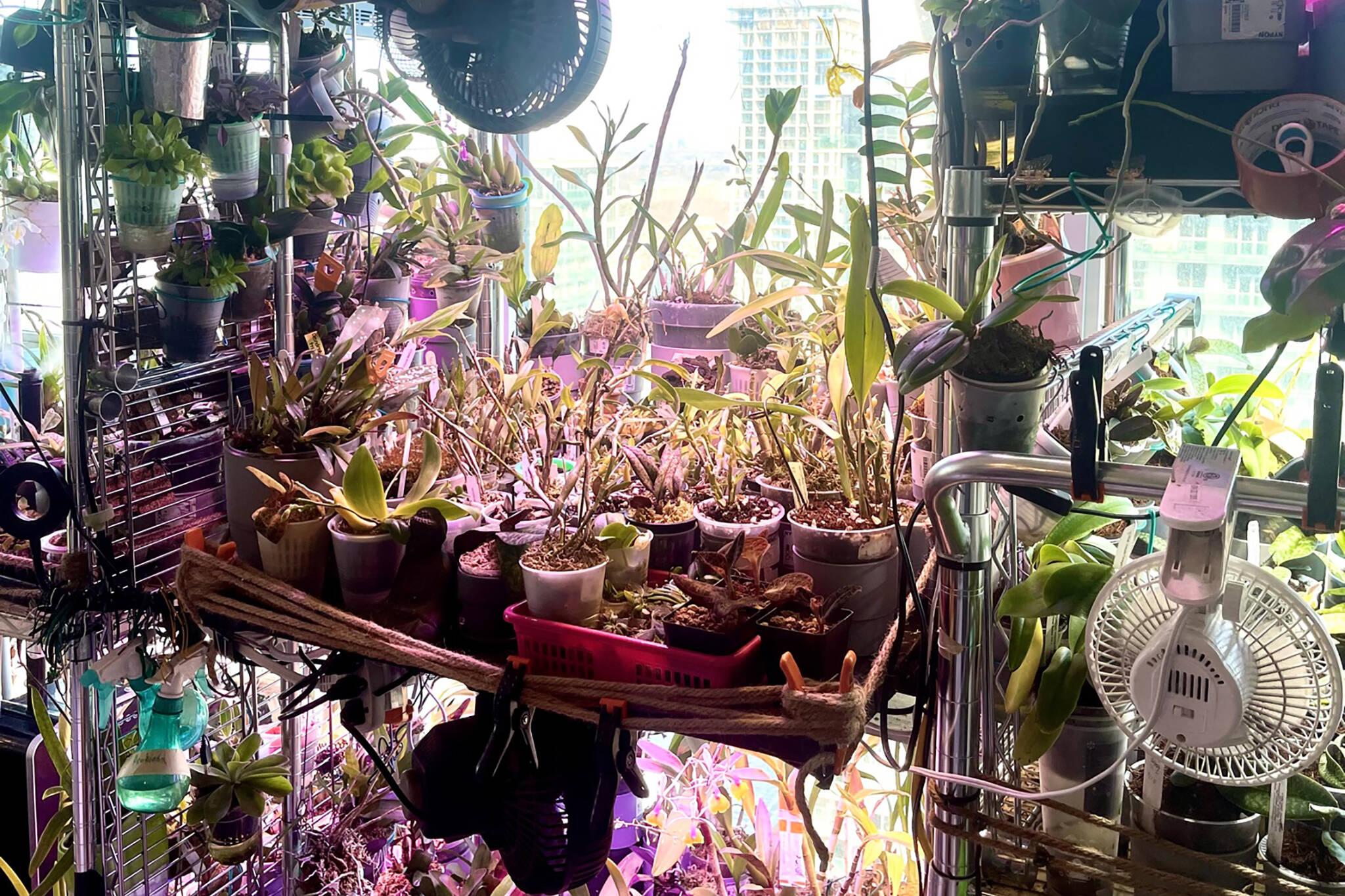 roehampton orchids toronto