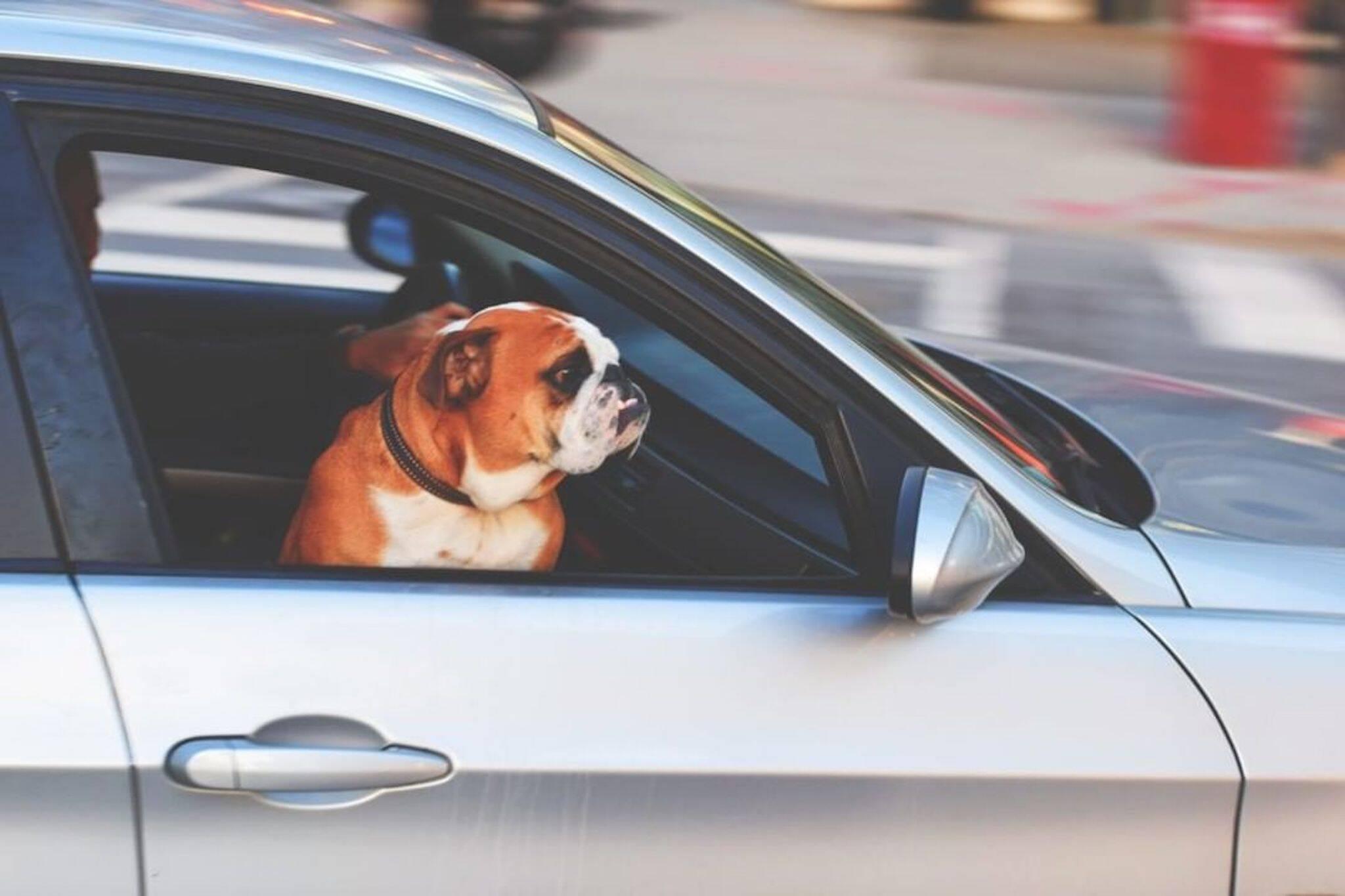 paws en route toronto