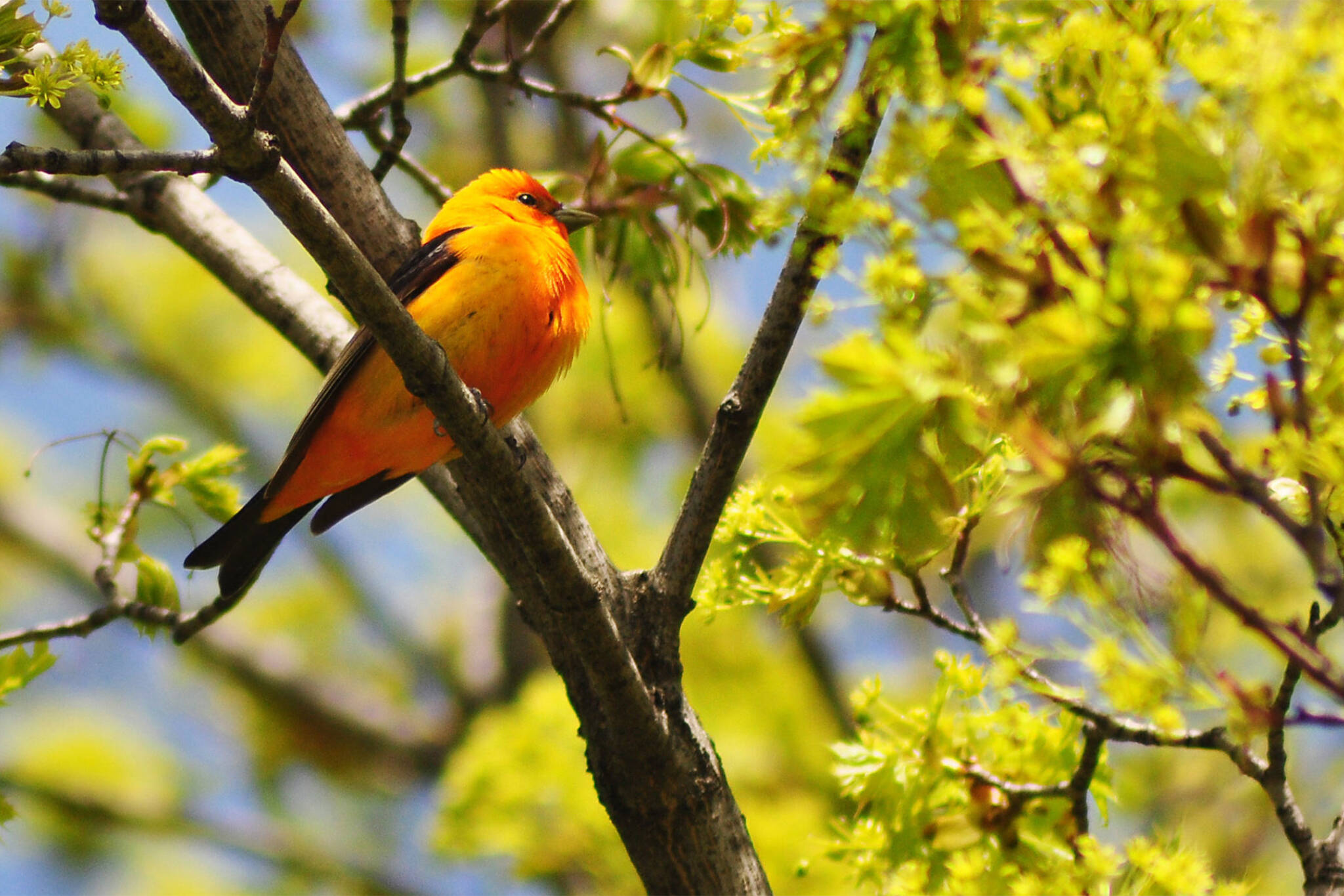 bird watching toronto
