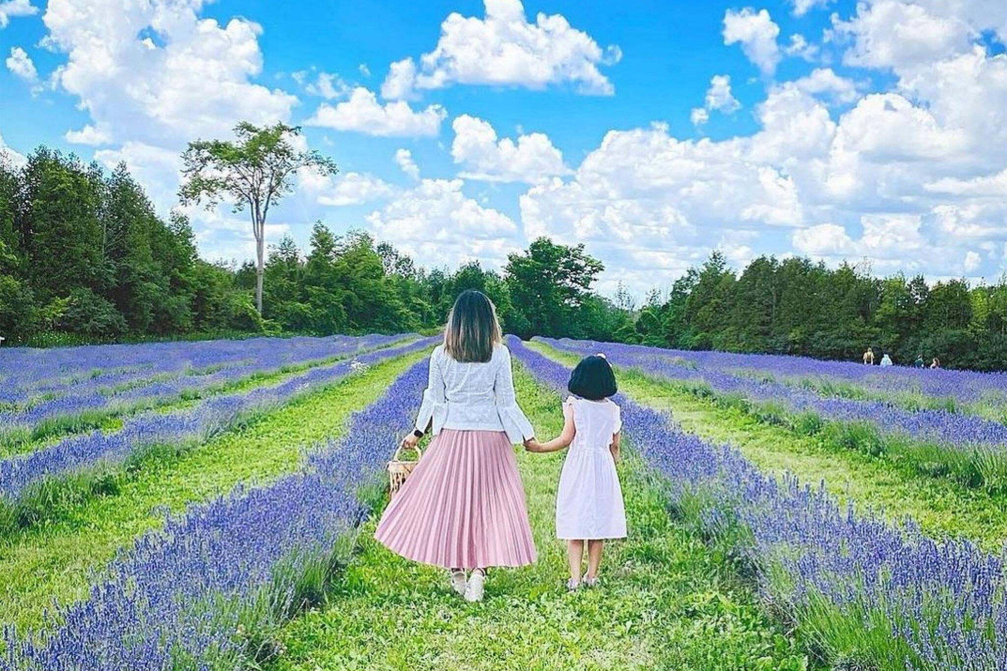 lavender farm toronto