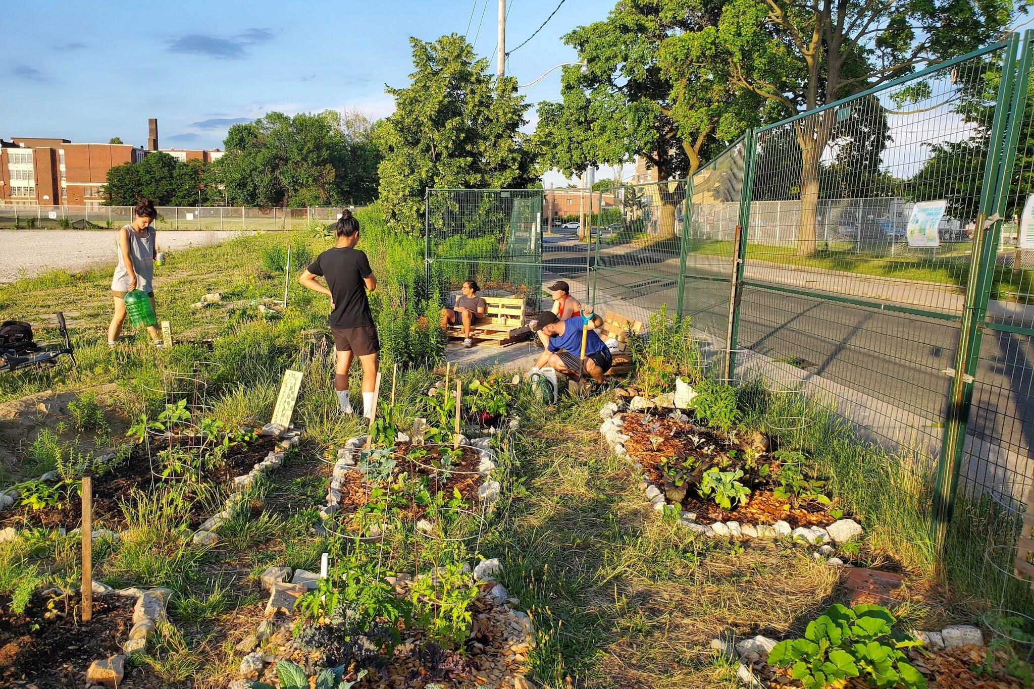 bloordale beach community gardens toronto