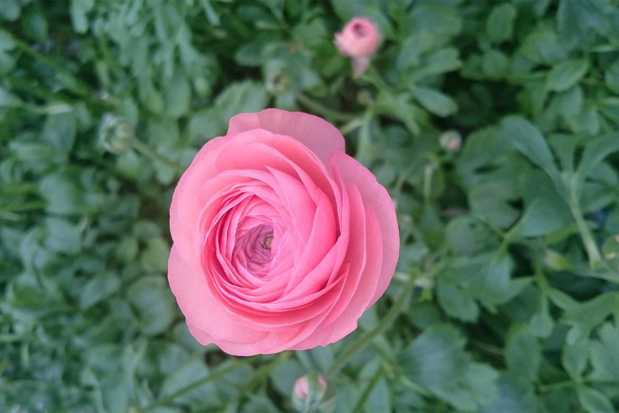 stems flower farm