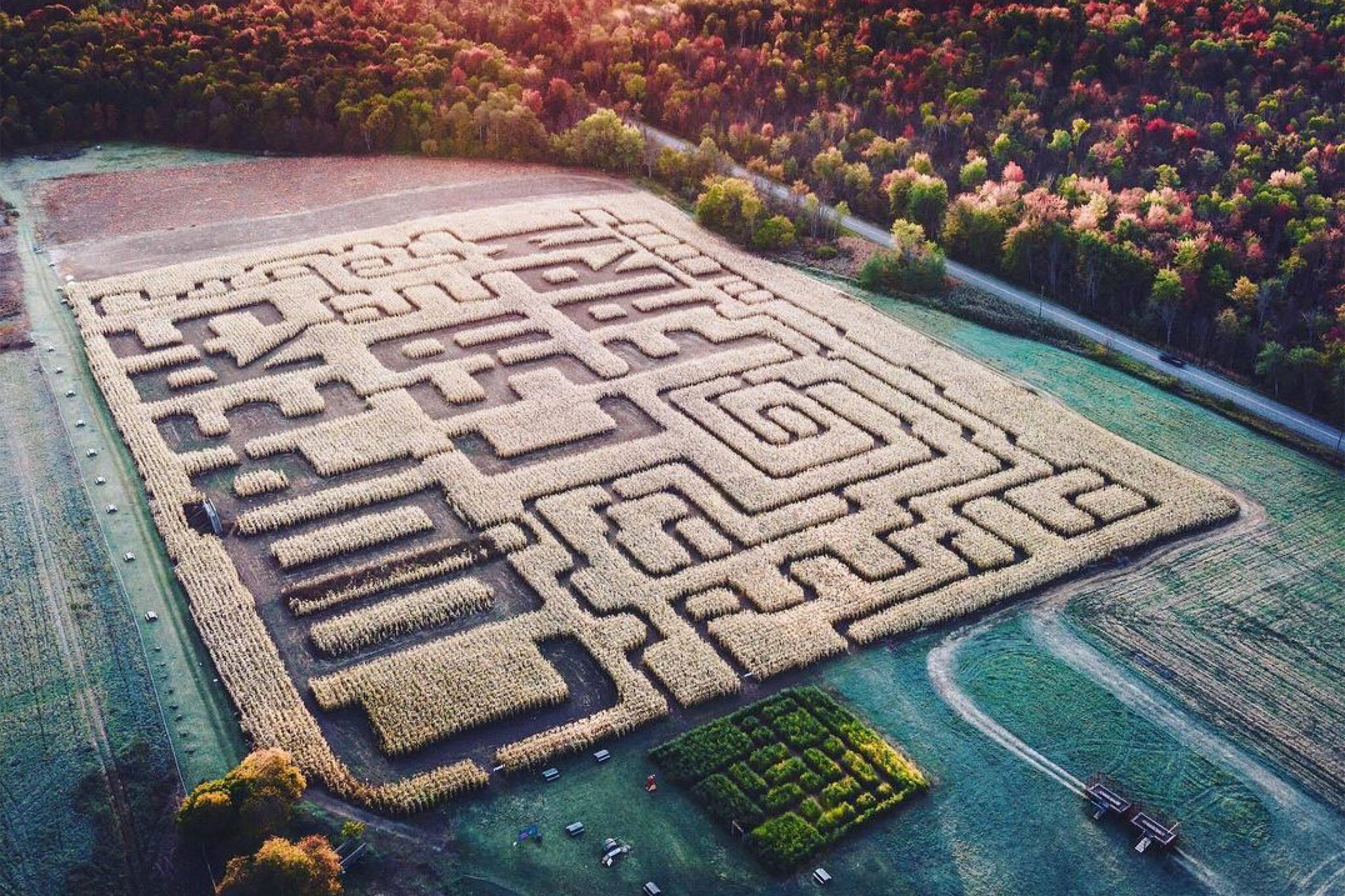 coopers corn maze