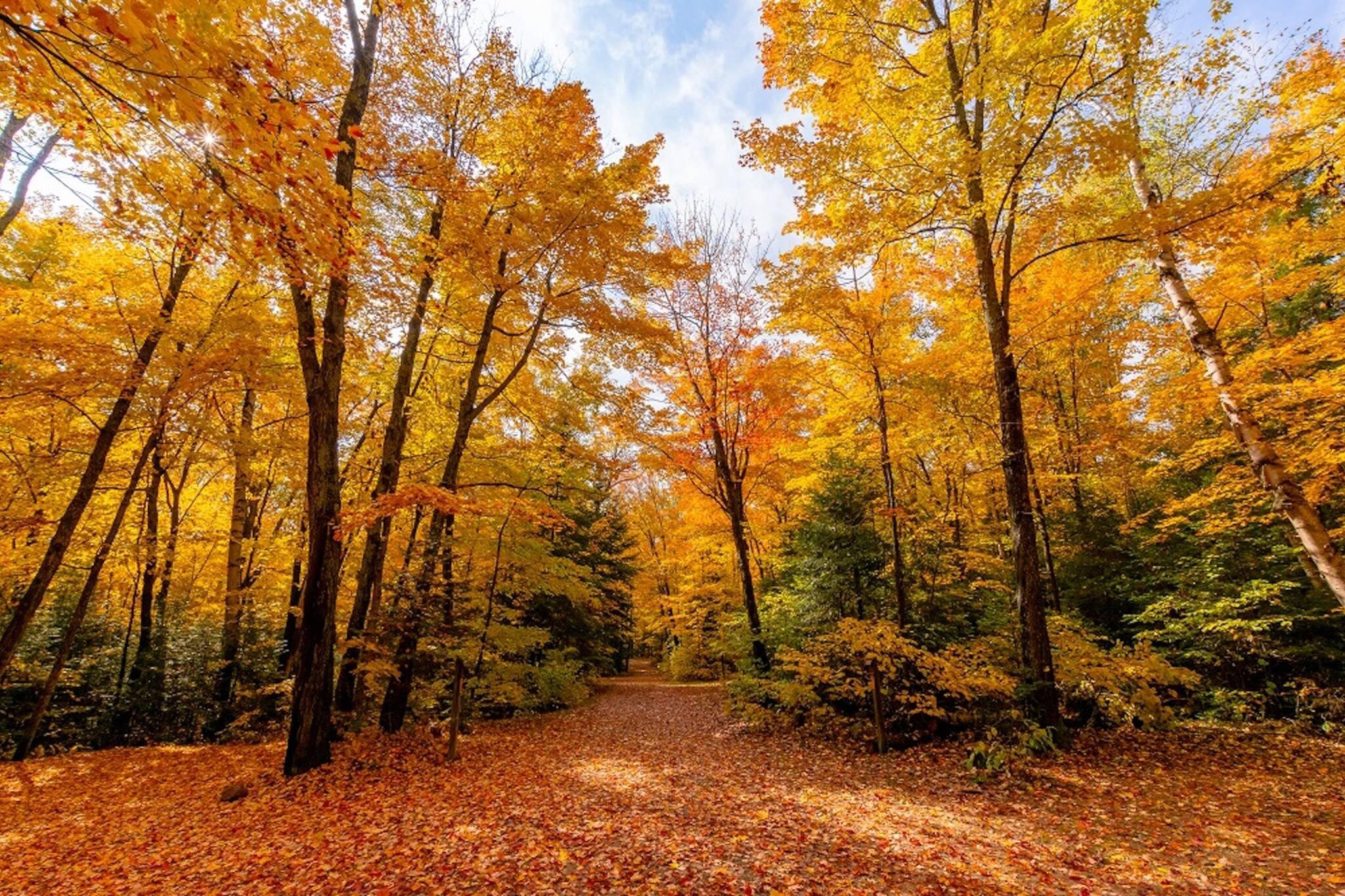 fall colours ontario 2021