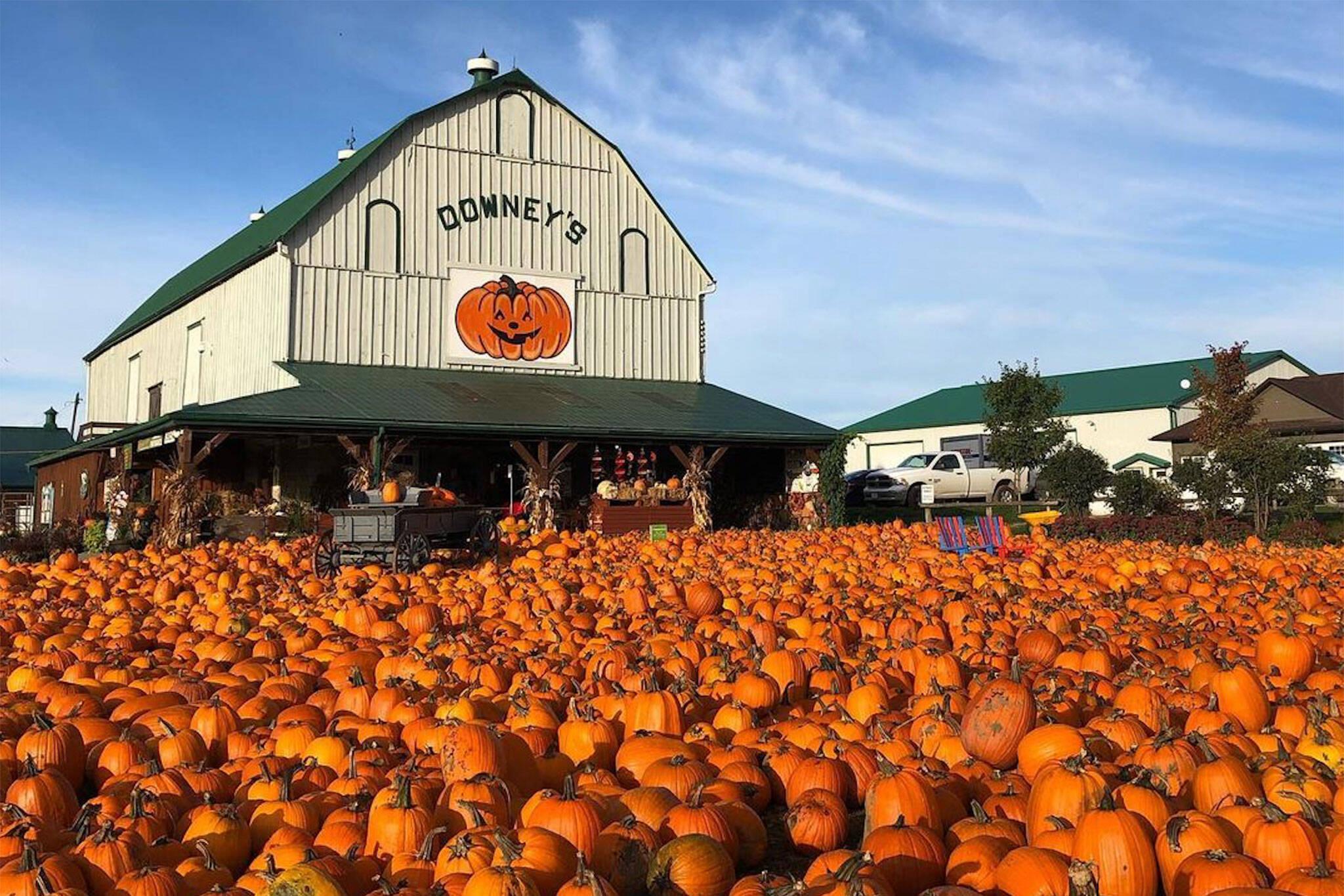 pumpkinfest toronto