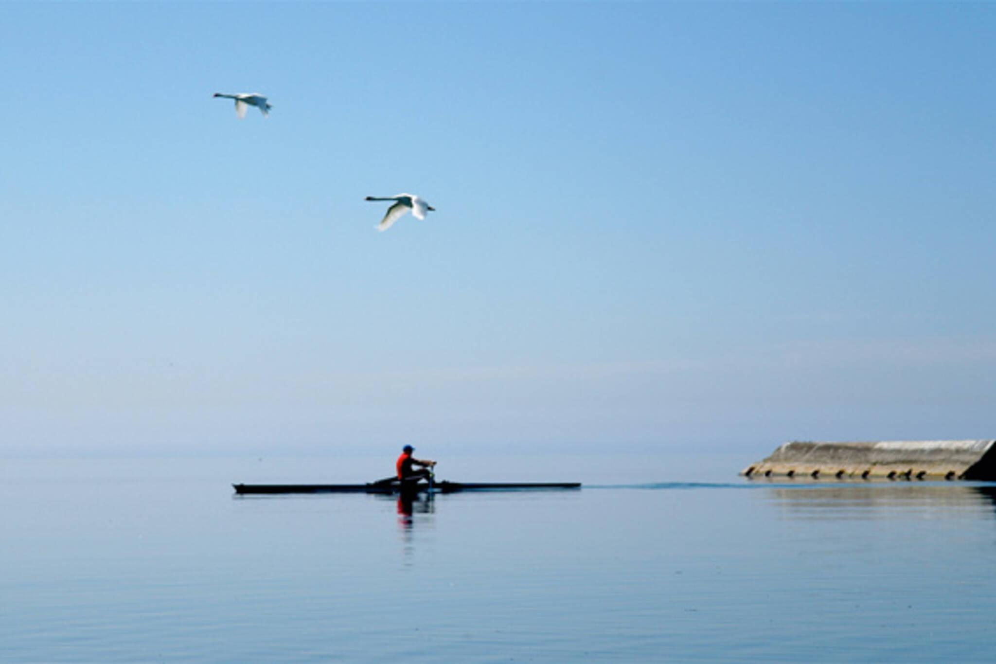 Lake Ontario Sculls