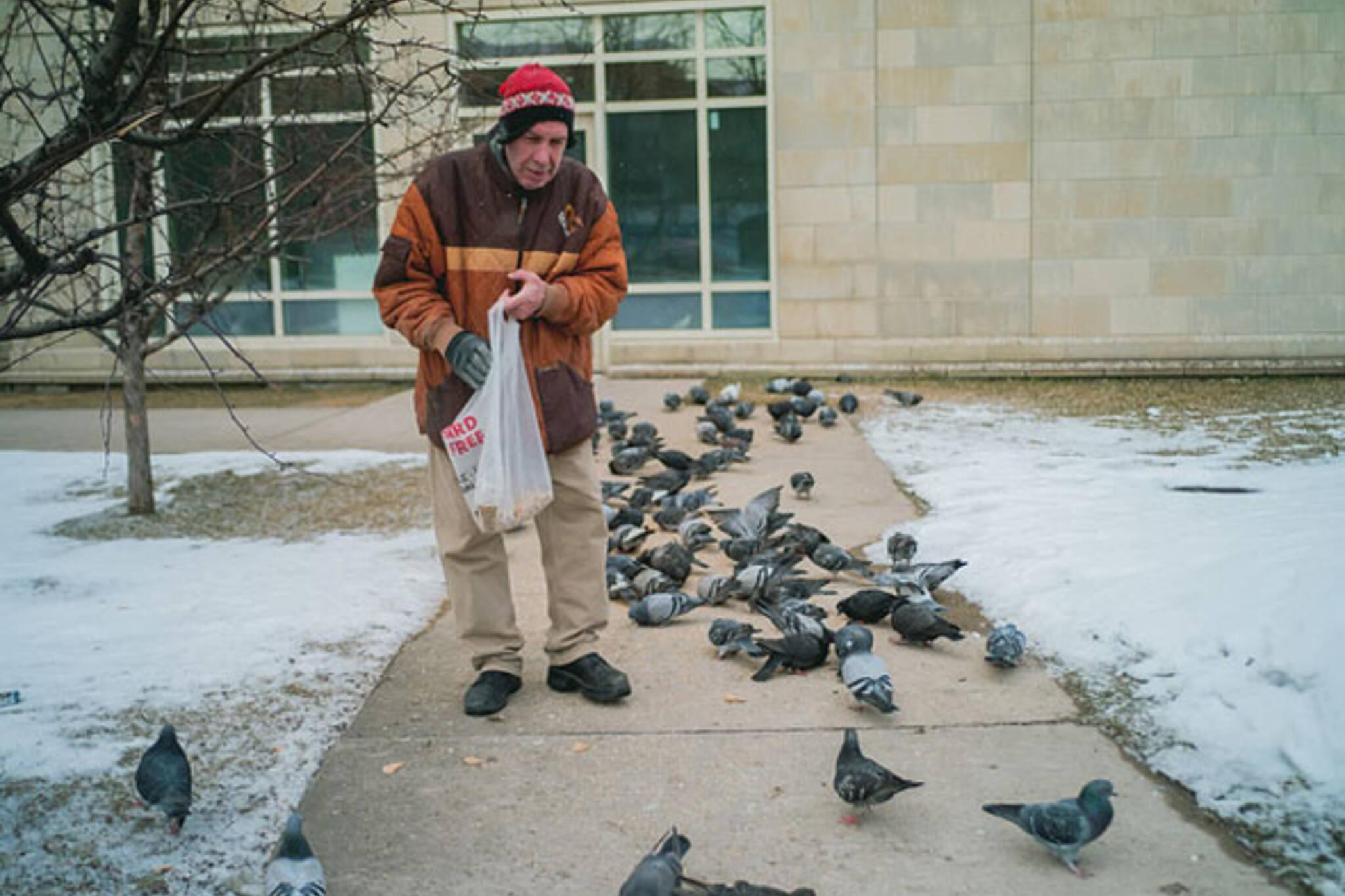 toronto birds