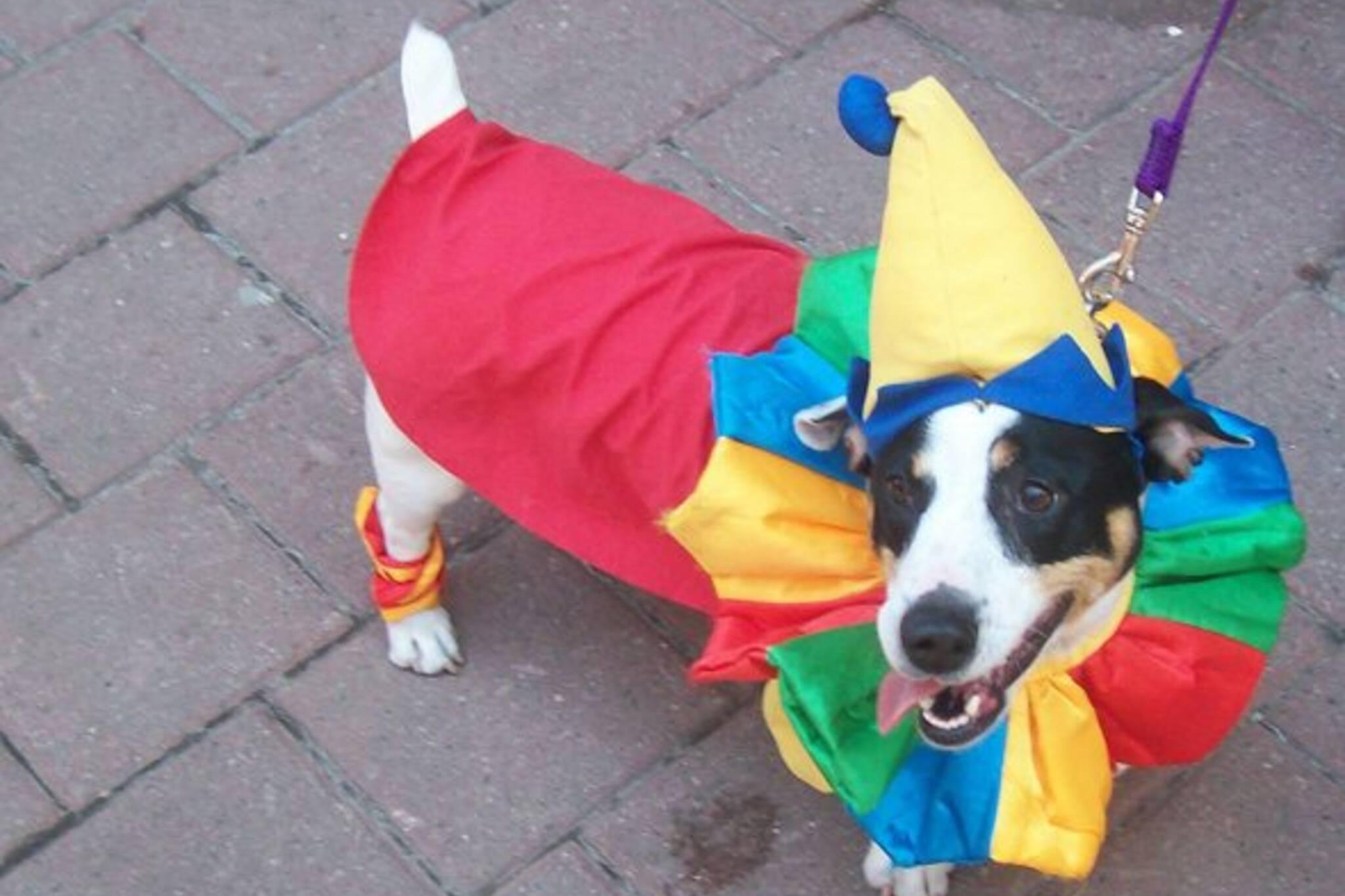 Canine Clown.jpg
