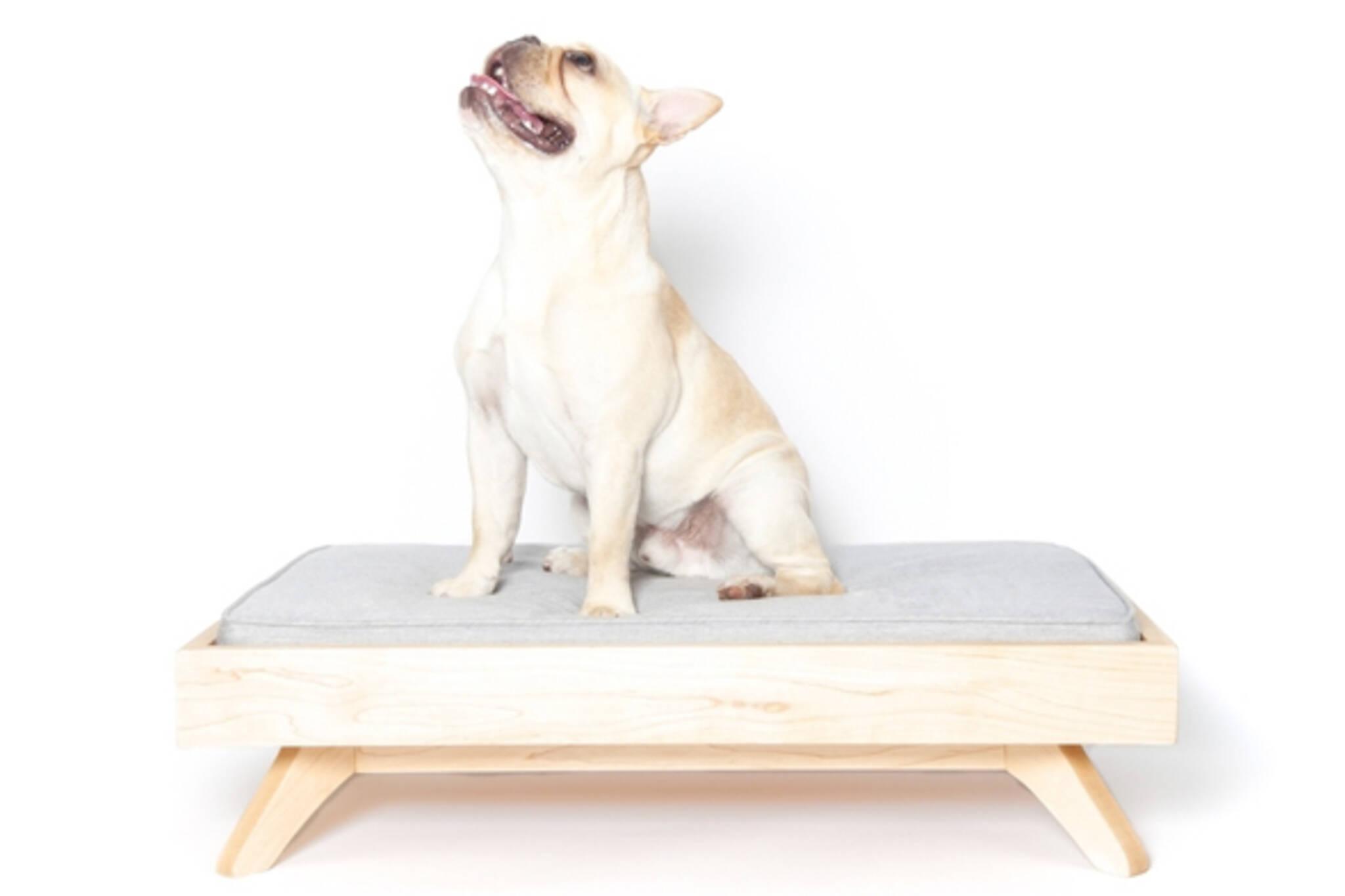 dog furniture toronto