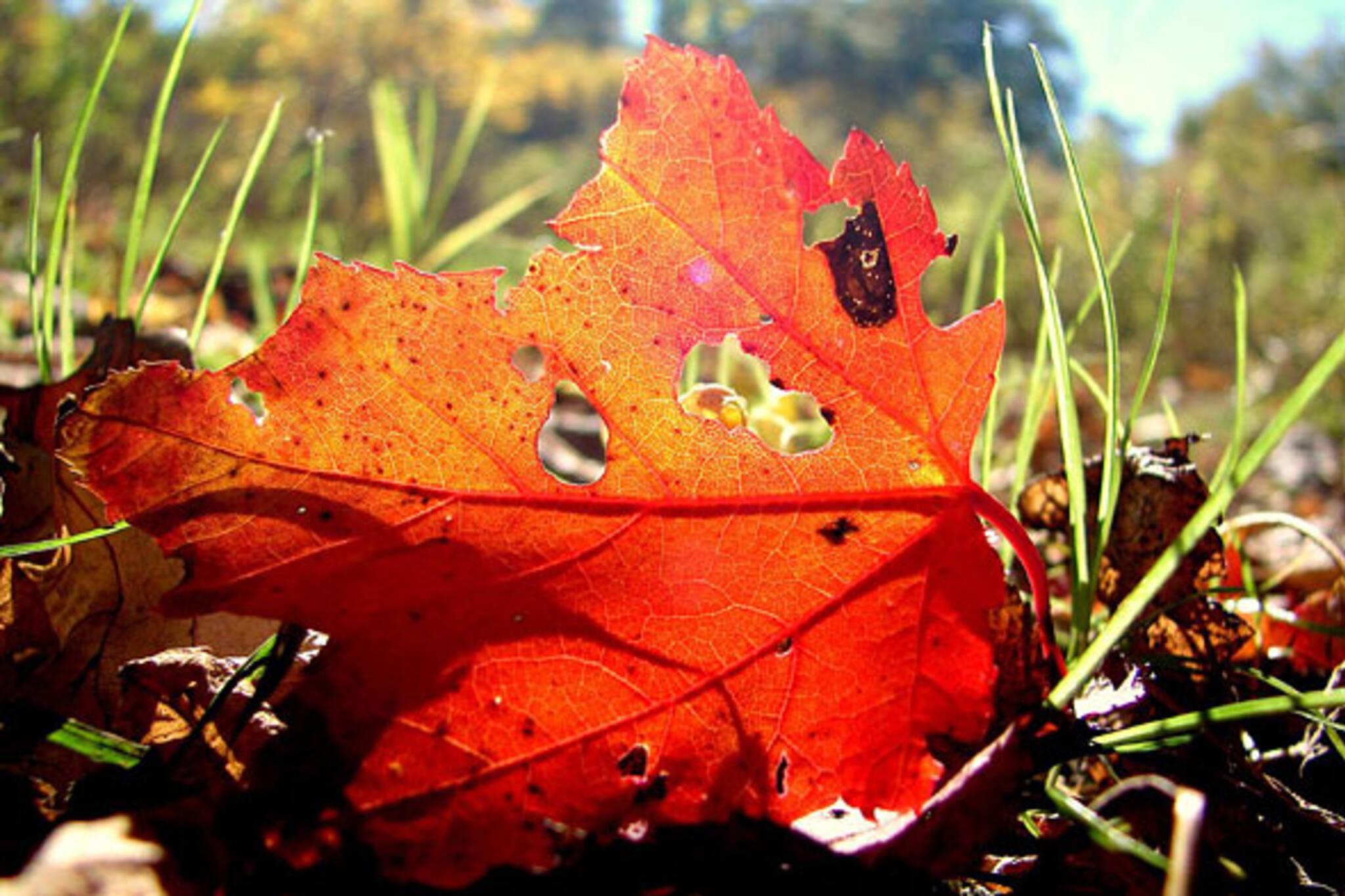 blogTO Mornign Brew fallen leaves
