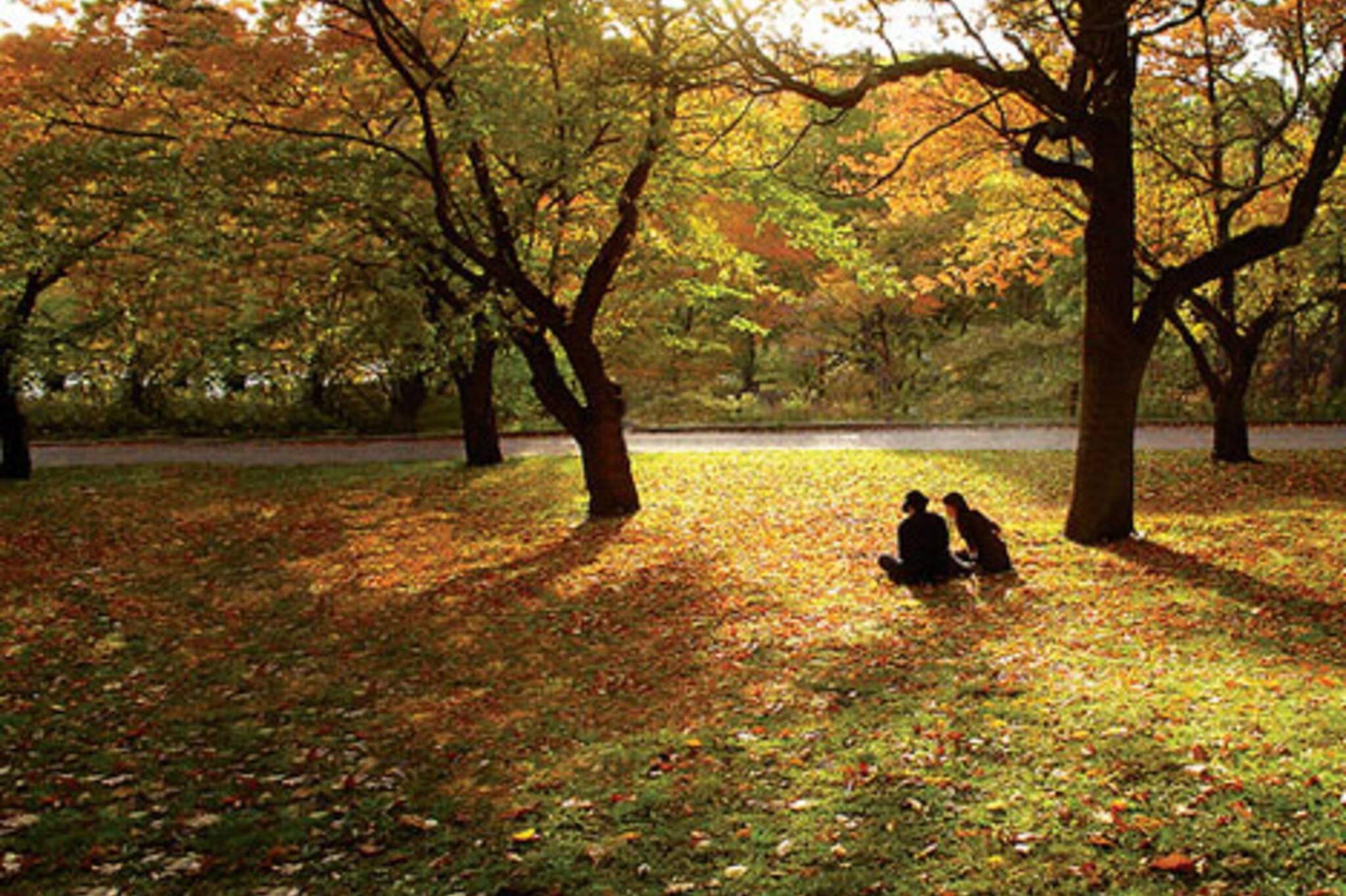 20061107_autumn01.jpg