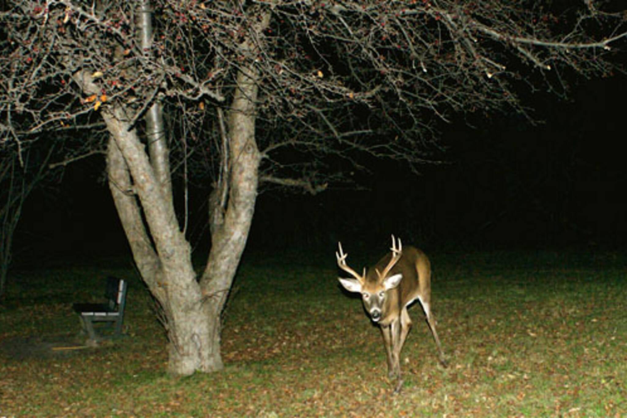 Deer In Toronto ravine