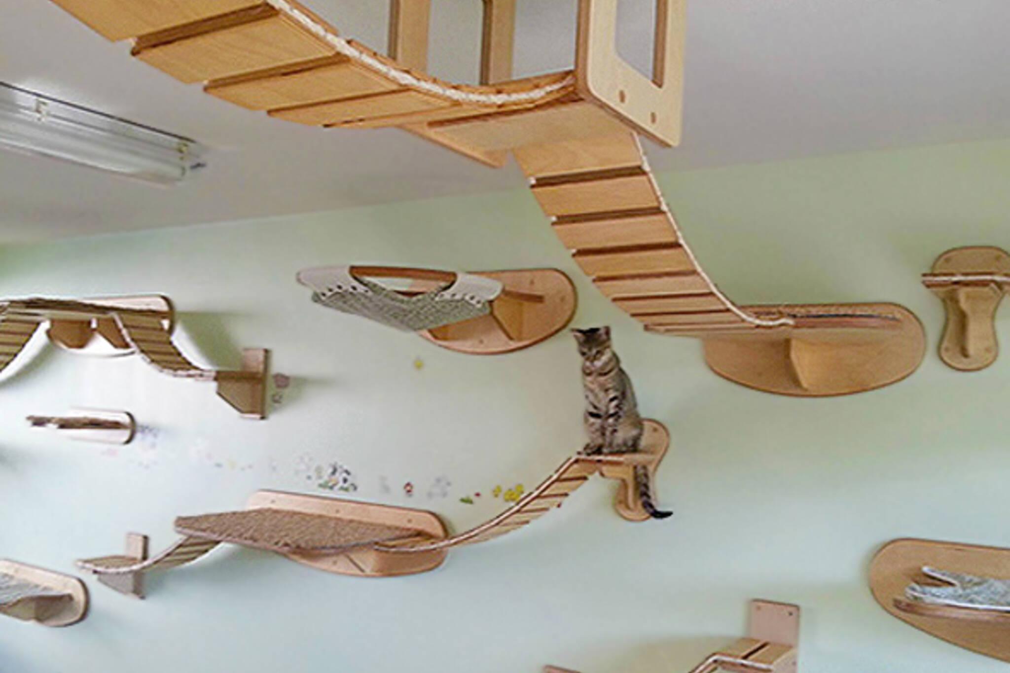 Cat cafes toronto