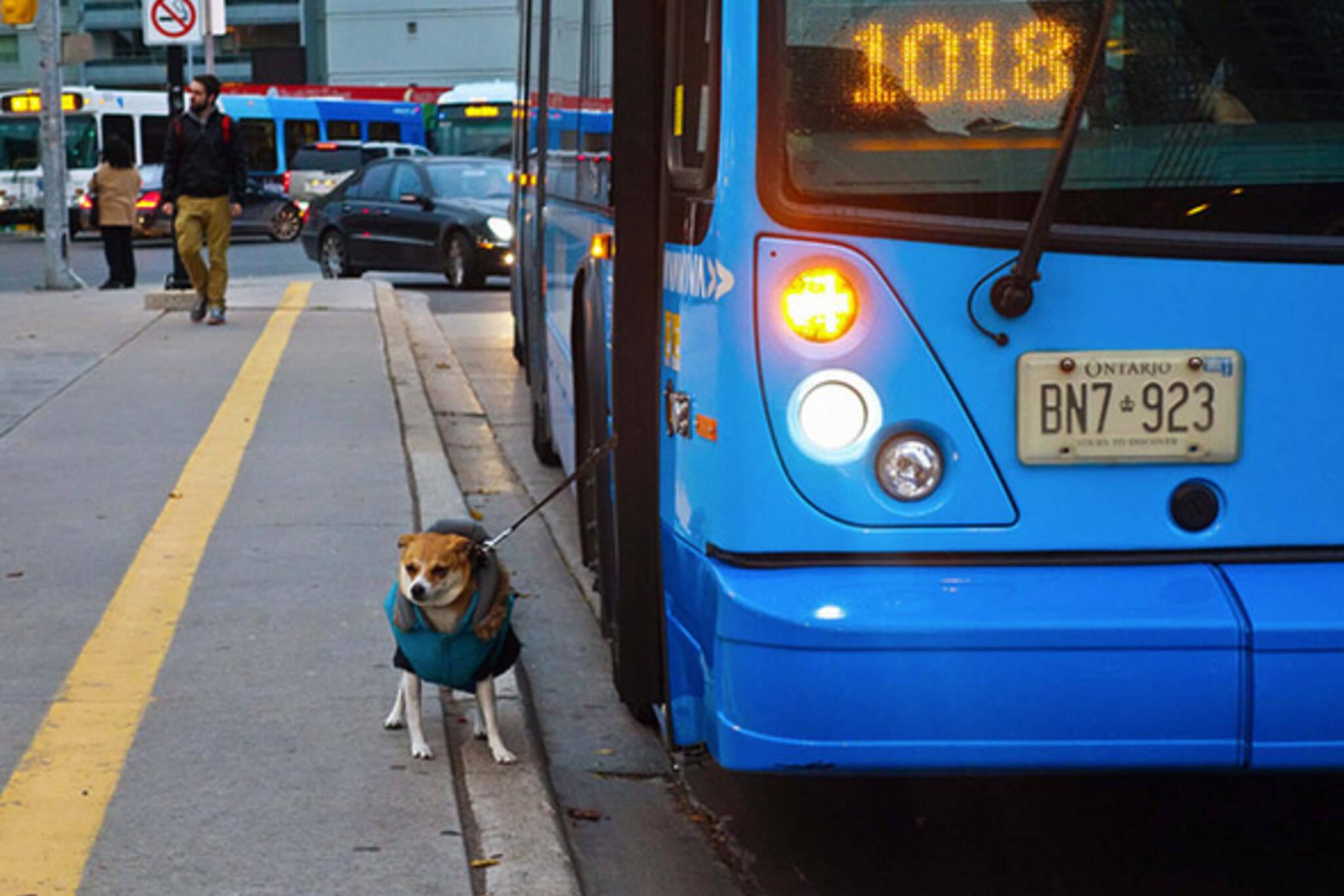 Dog Toronto