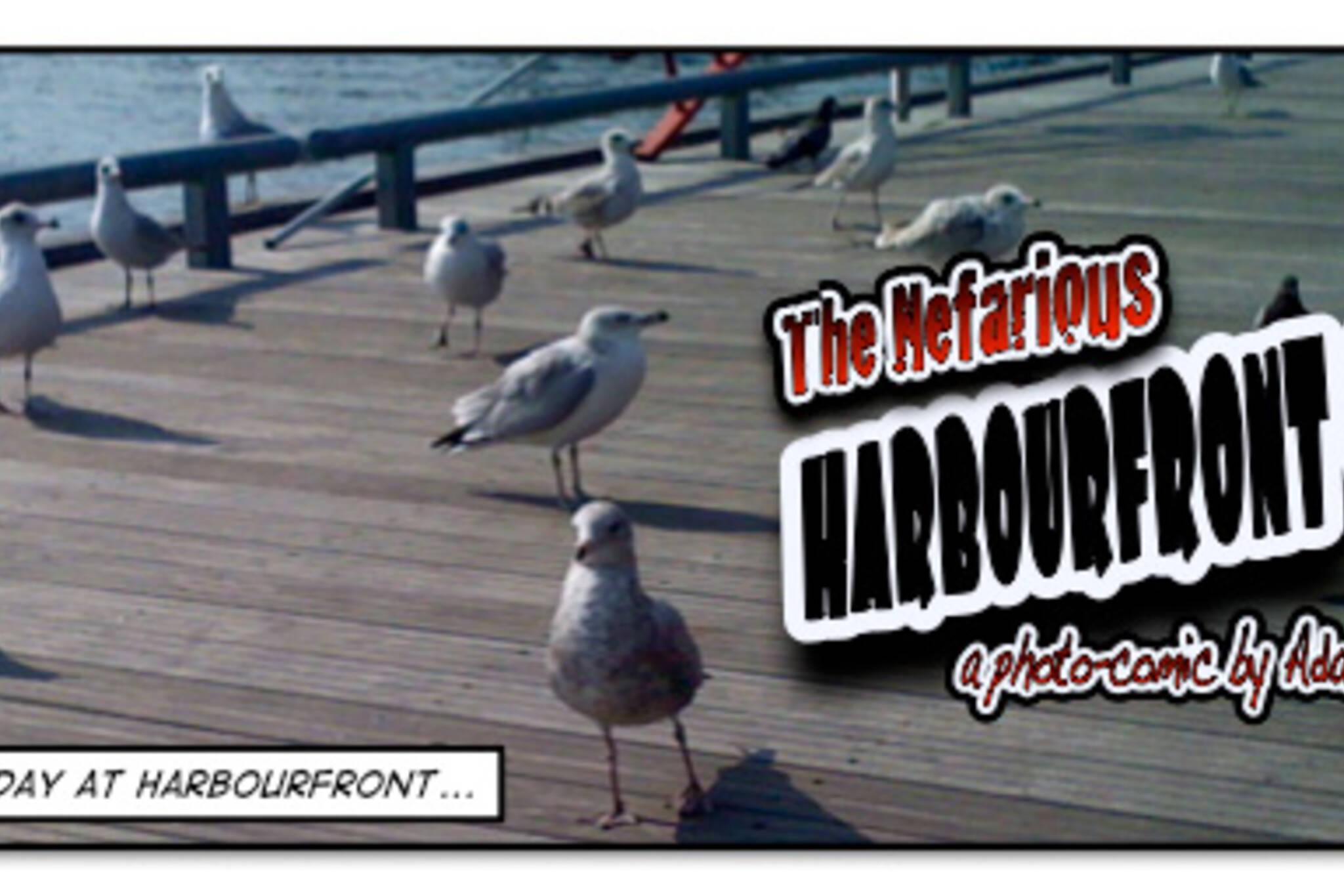 Nefarious Harbourfront Gulls