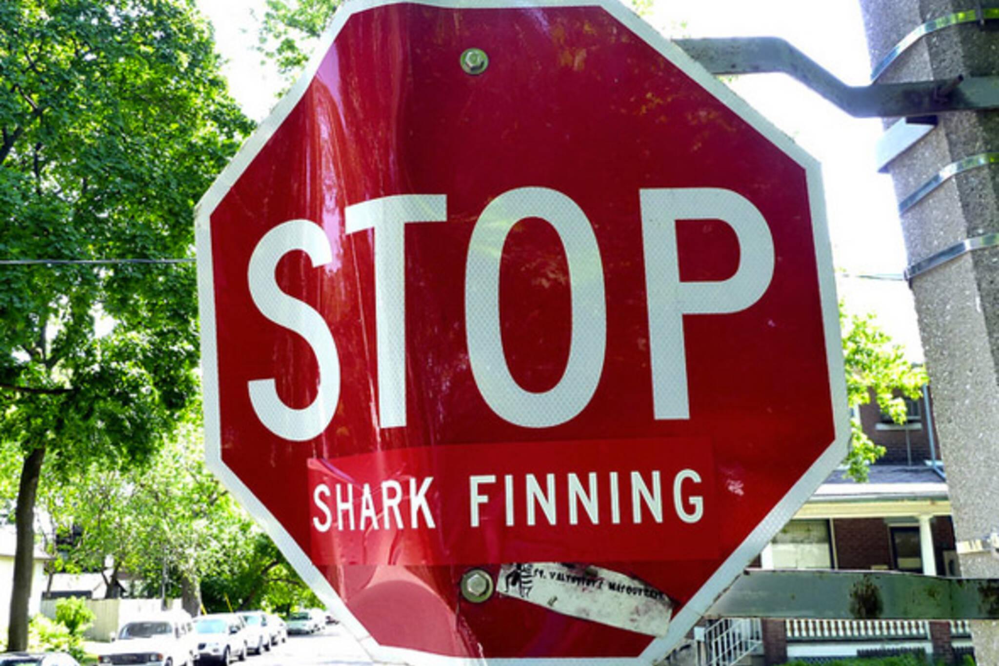 Toronto Shark Fin Ban