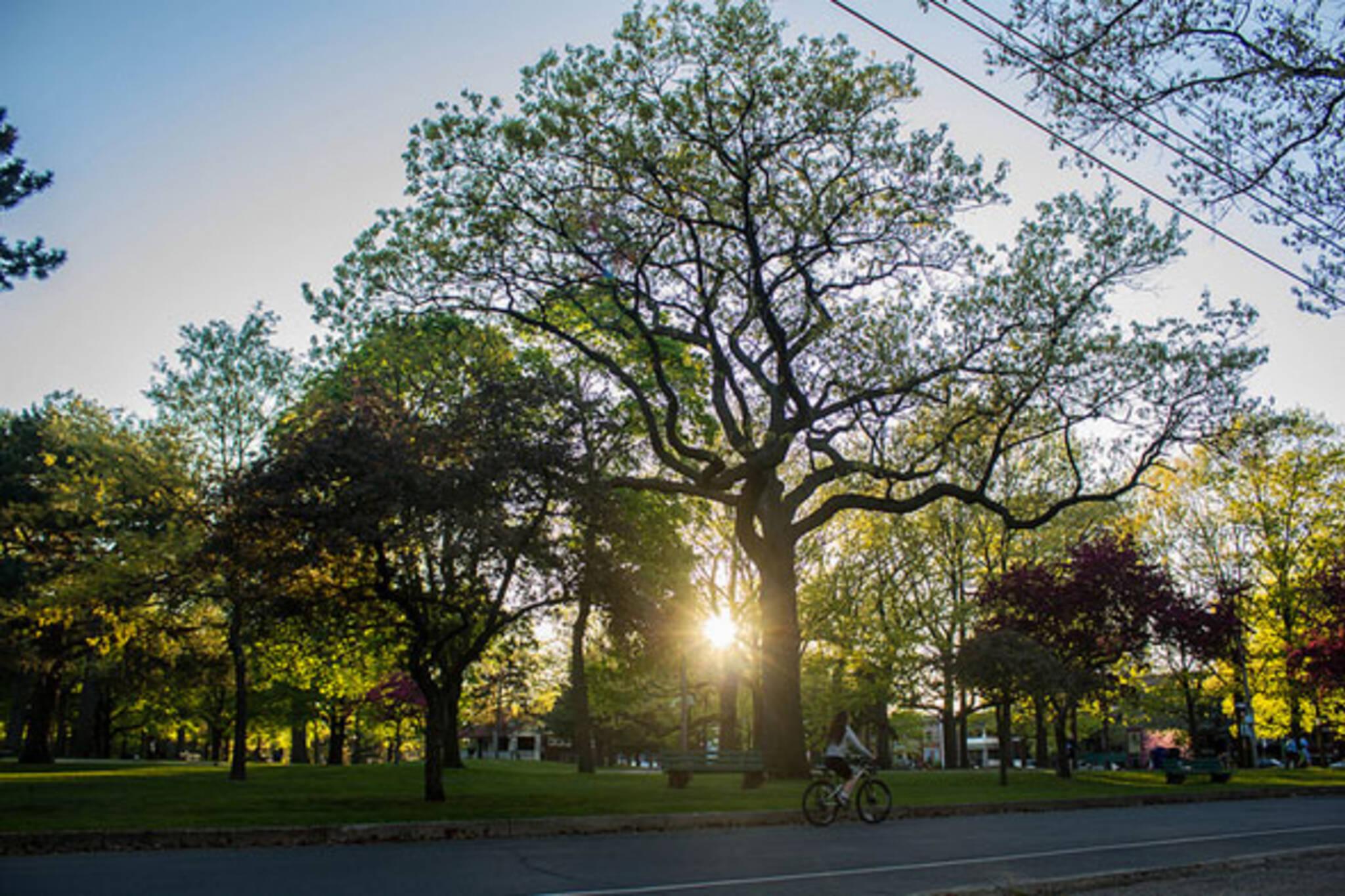 toronto trees sun