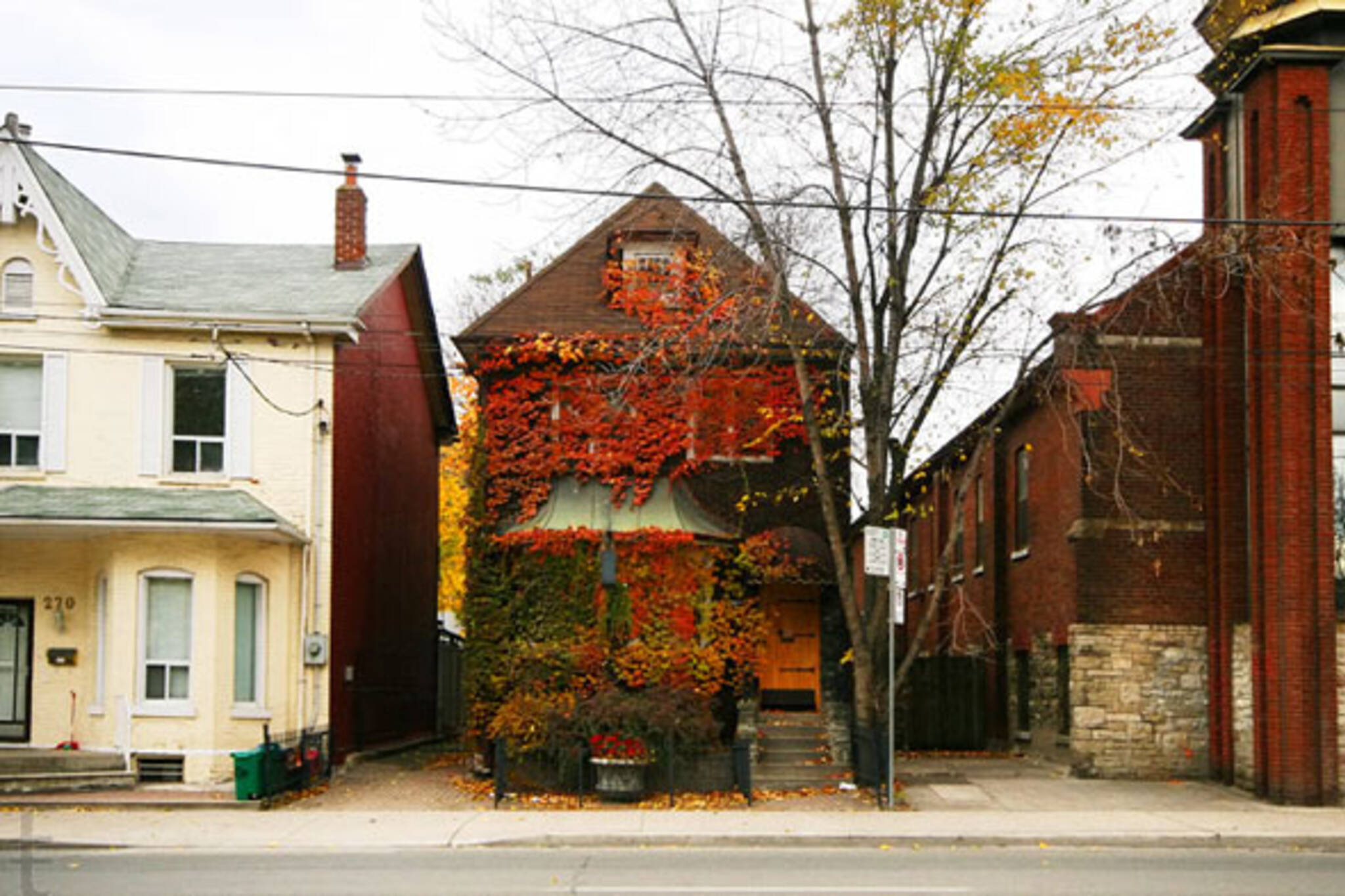 blogto morning brew ivy covered house